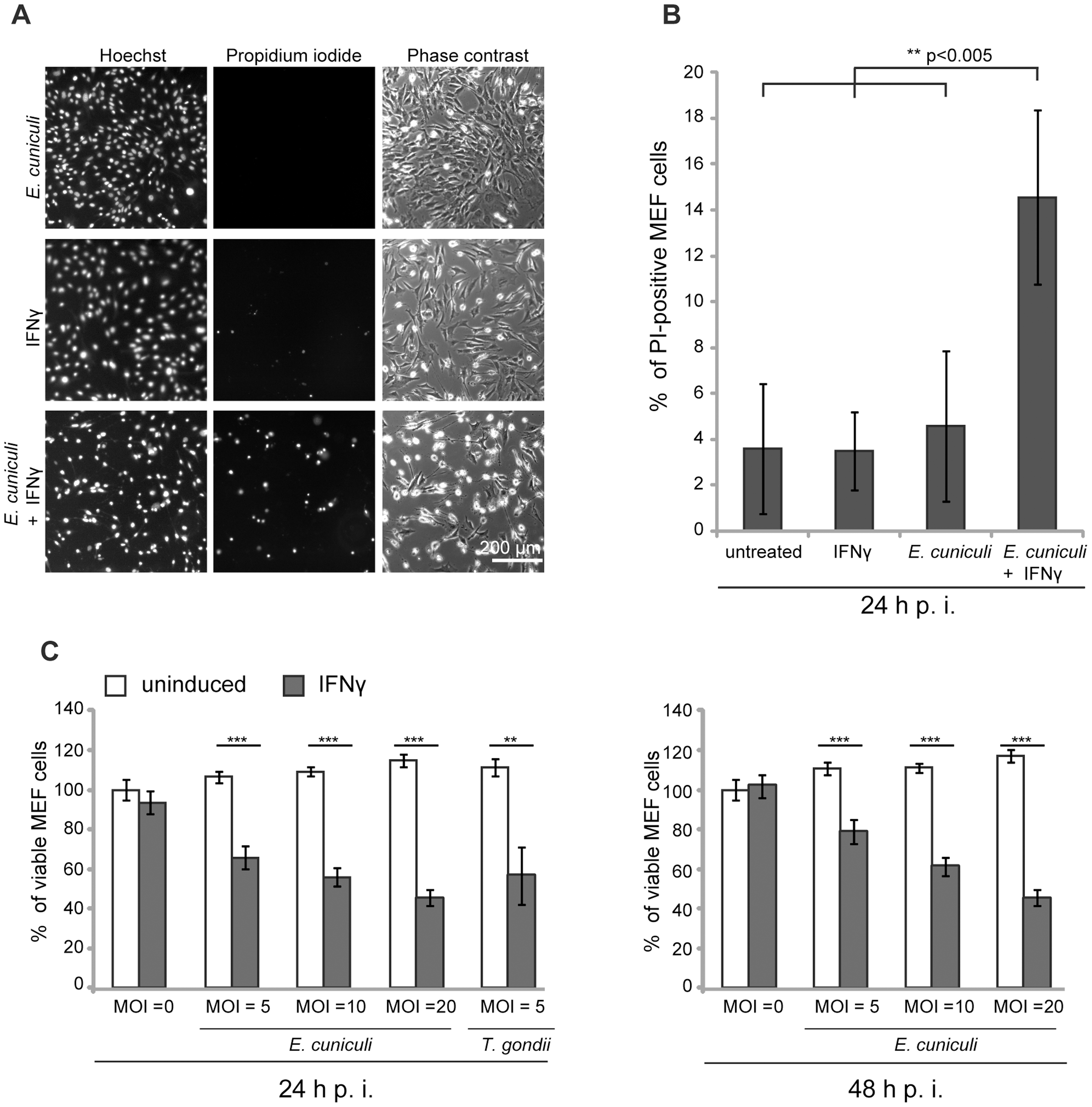 <i>E. cuniculi</i> infection triggers IFNγ-dependent host cell death.