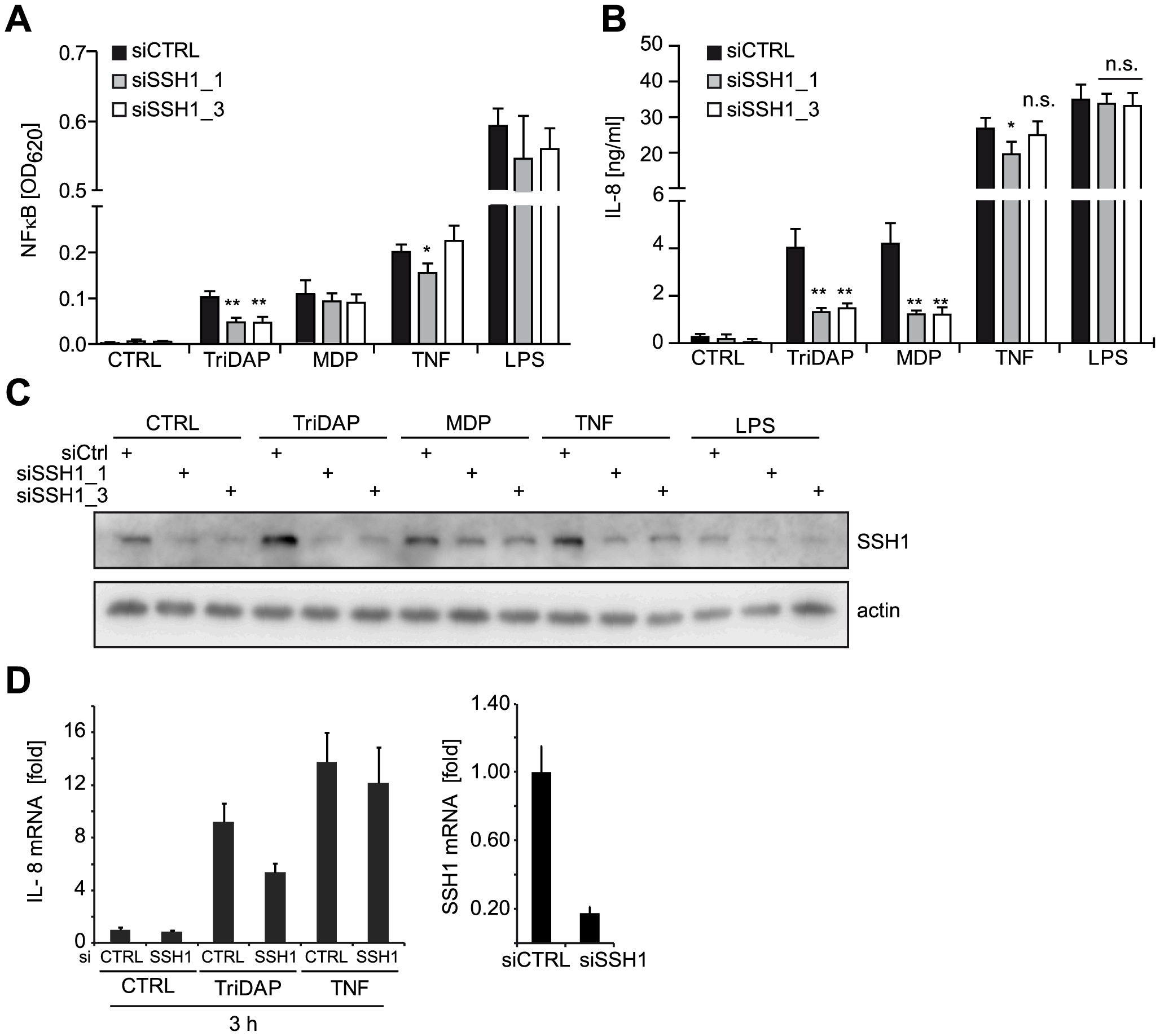 SSH1 is essential and specific for NOD1-mediated signaling.