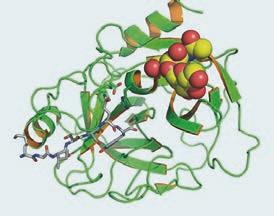 2D rekonstrukce molekuly PSA.