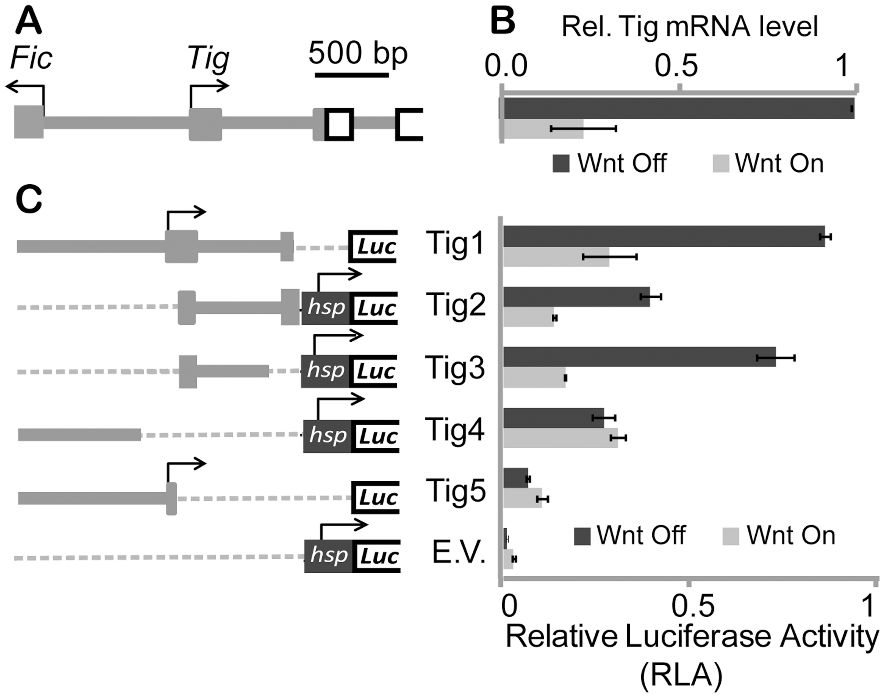 Characterization of <i>Tig</i> cis-regulatory information in Kc cells.
