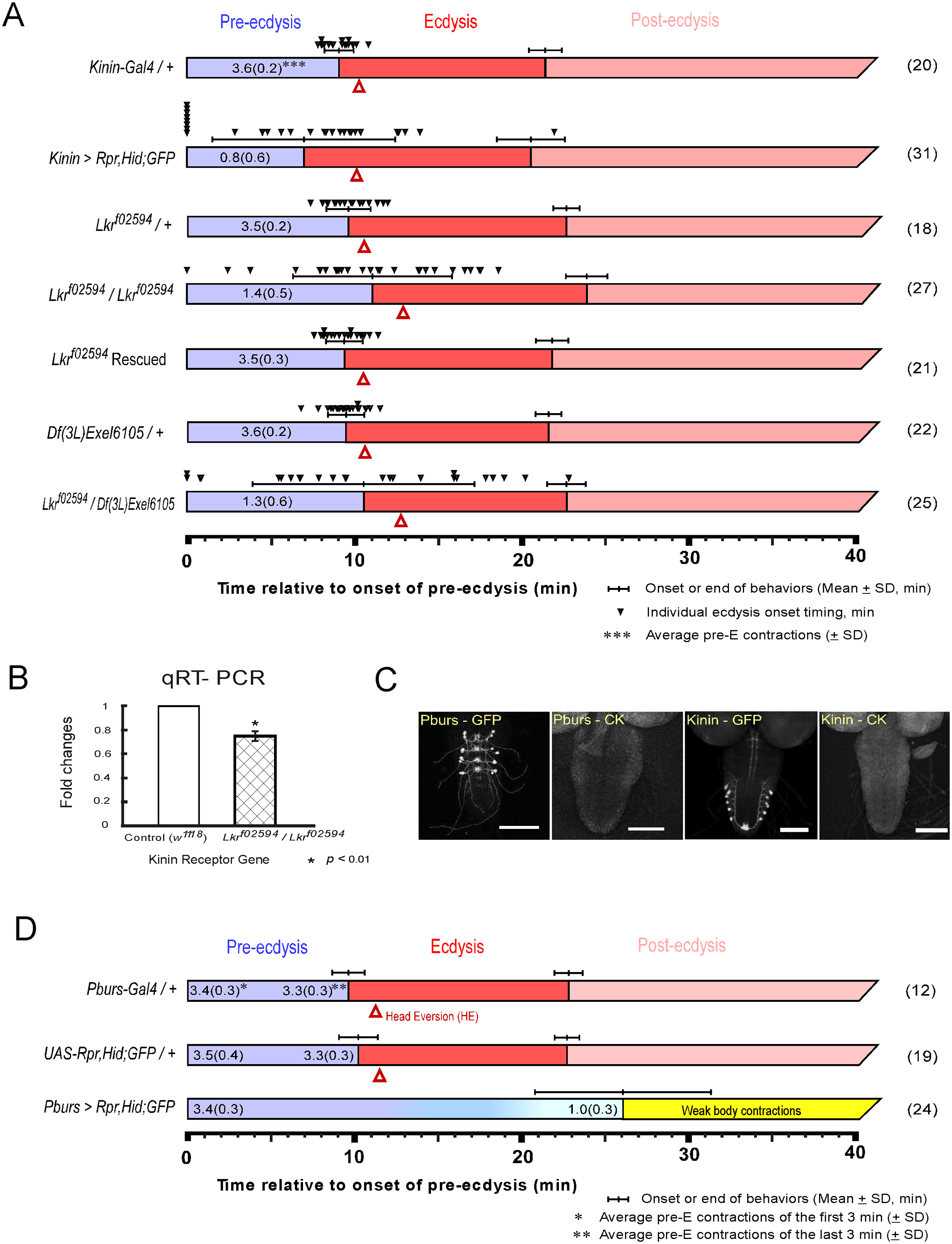 Flies with impaired kinin or CAMB signaling show significant defects in the ecdysis FAP.