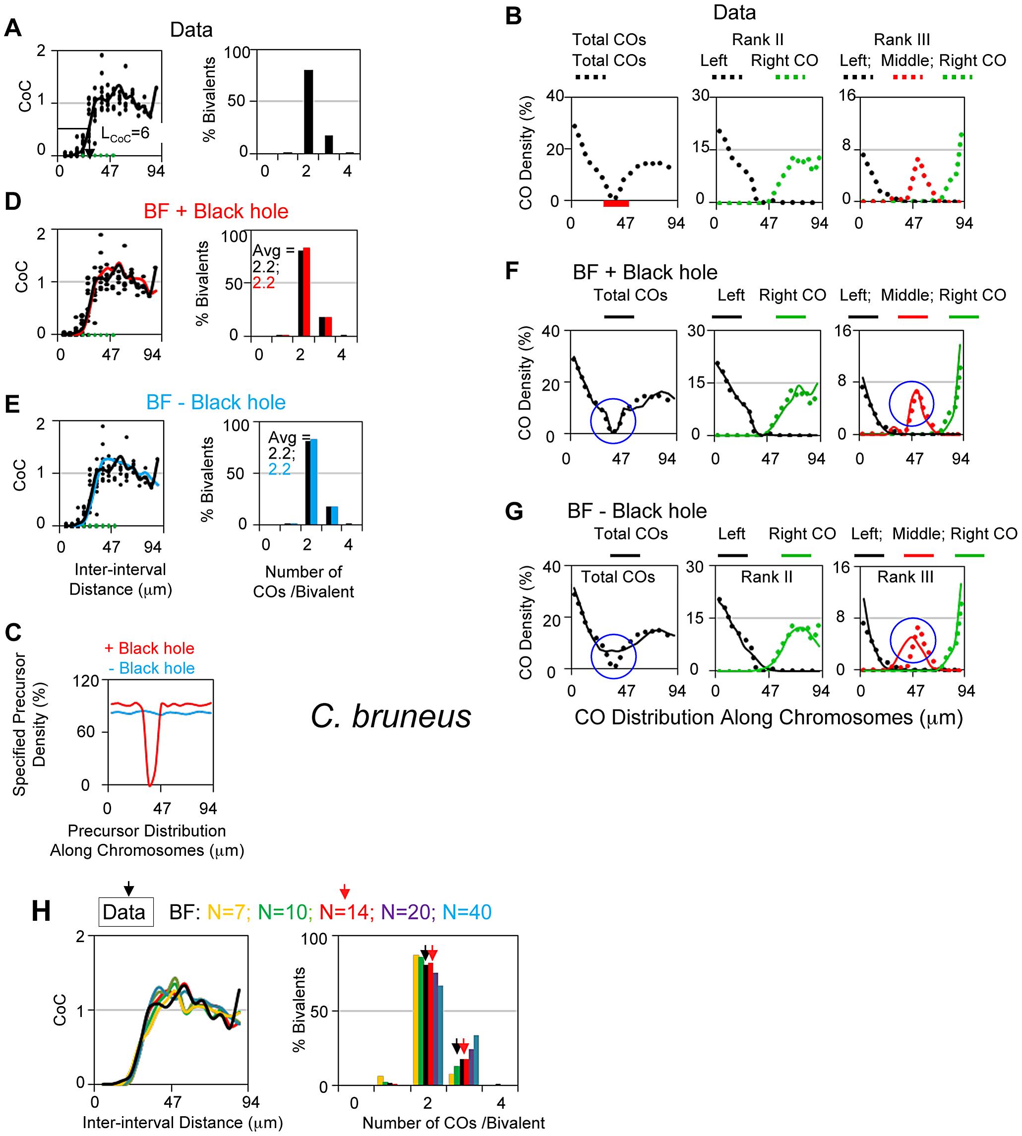 Experimental and BF analysis of CO patterns in grasshopper (<i>Chorthippus bruneus</i>).
