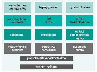 Schéma 2. Možné patogenetické mechanizmy diabetické kardiomyopatie