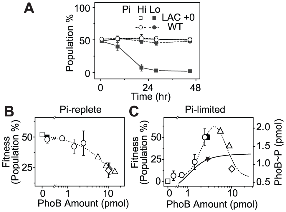 PhoB expression levels correlate with cell fitness in continuous competition assays.