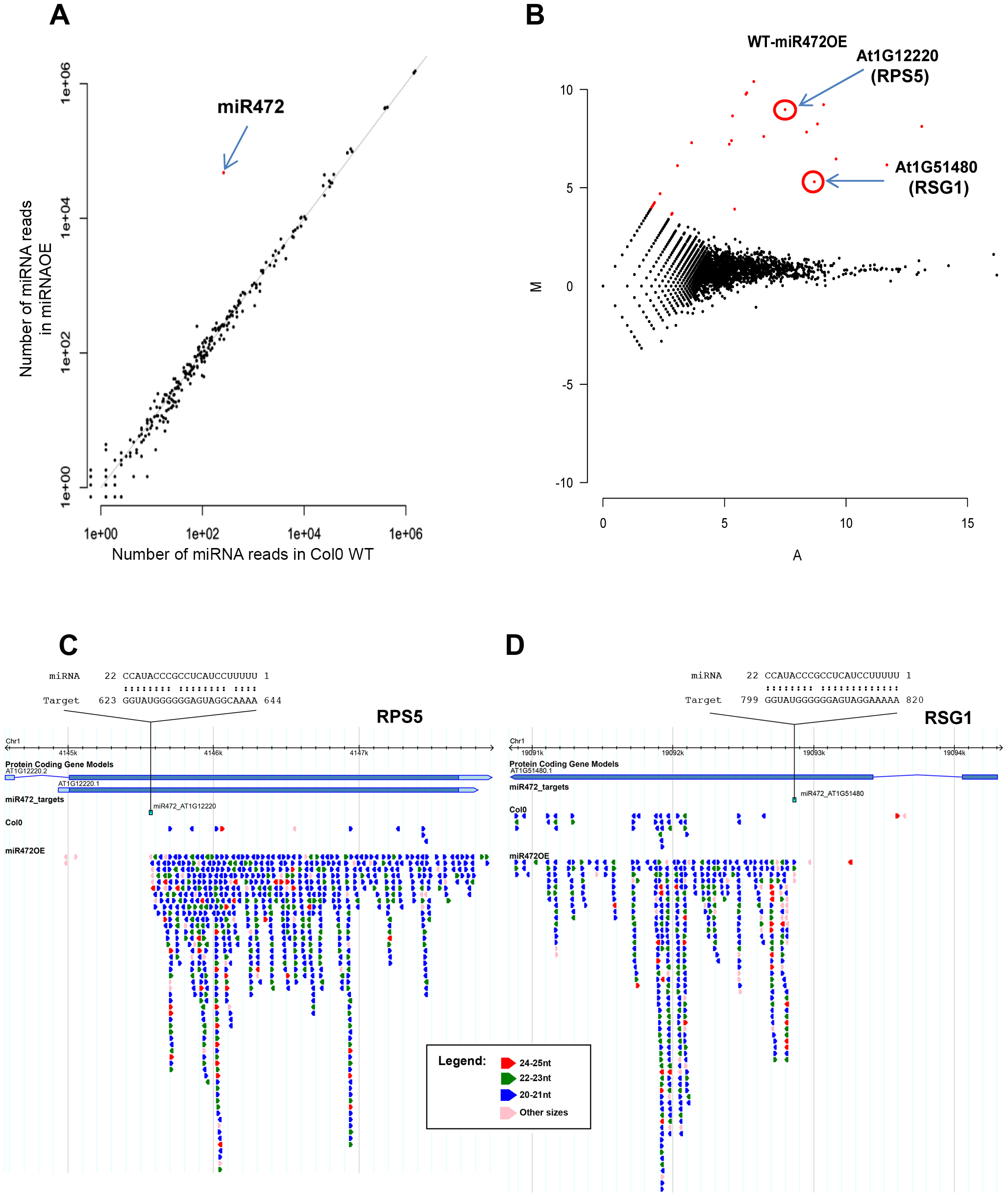 Overexpression of miR472 drastically enhances the accumulation of secondary siRNAs at multiple CNL transcripts.