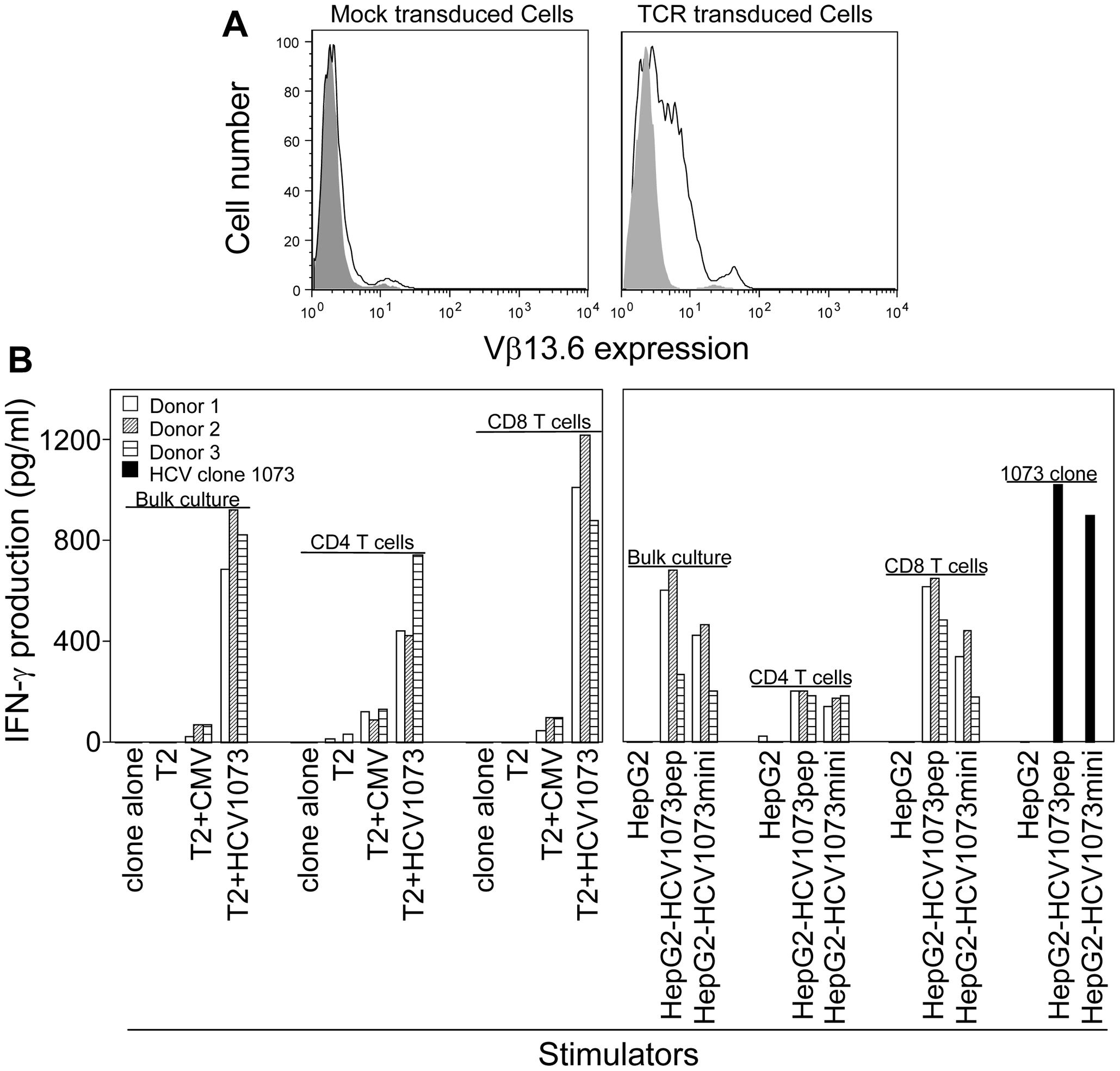 Antigen recognition by HCV TCR 1073-transduced PBLs.