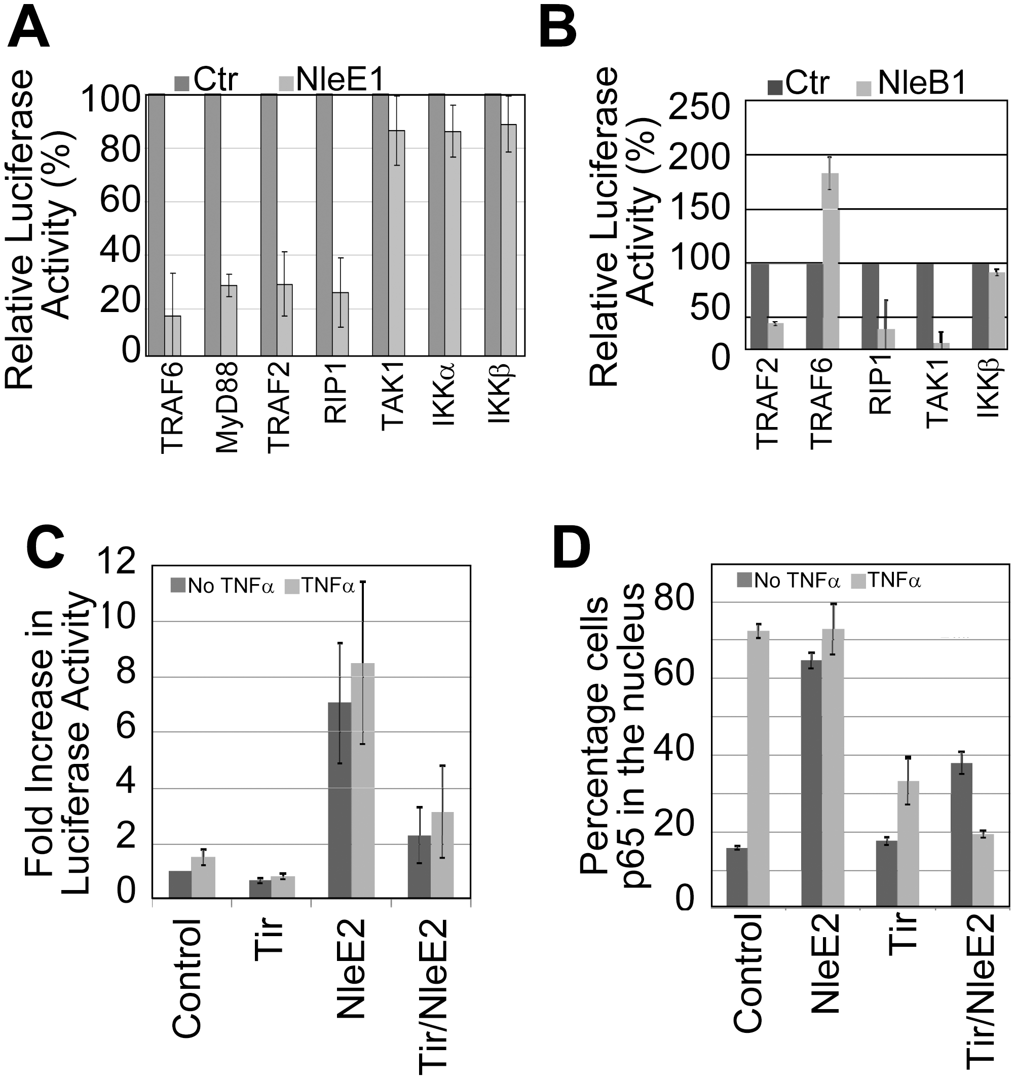 NleB1 and NleE1 targets in the subversion of NF-κB activity.