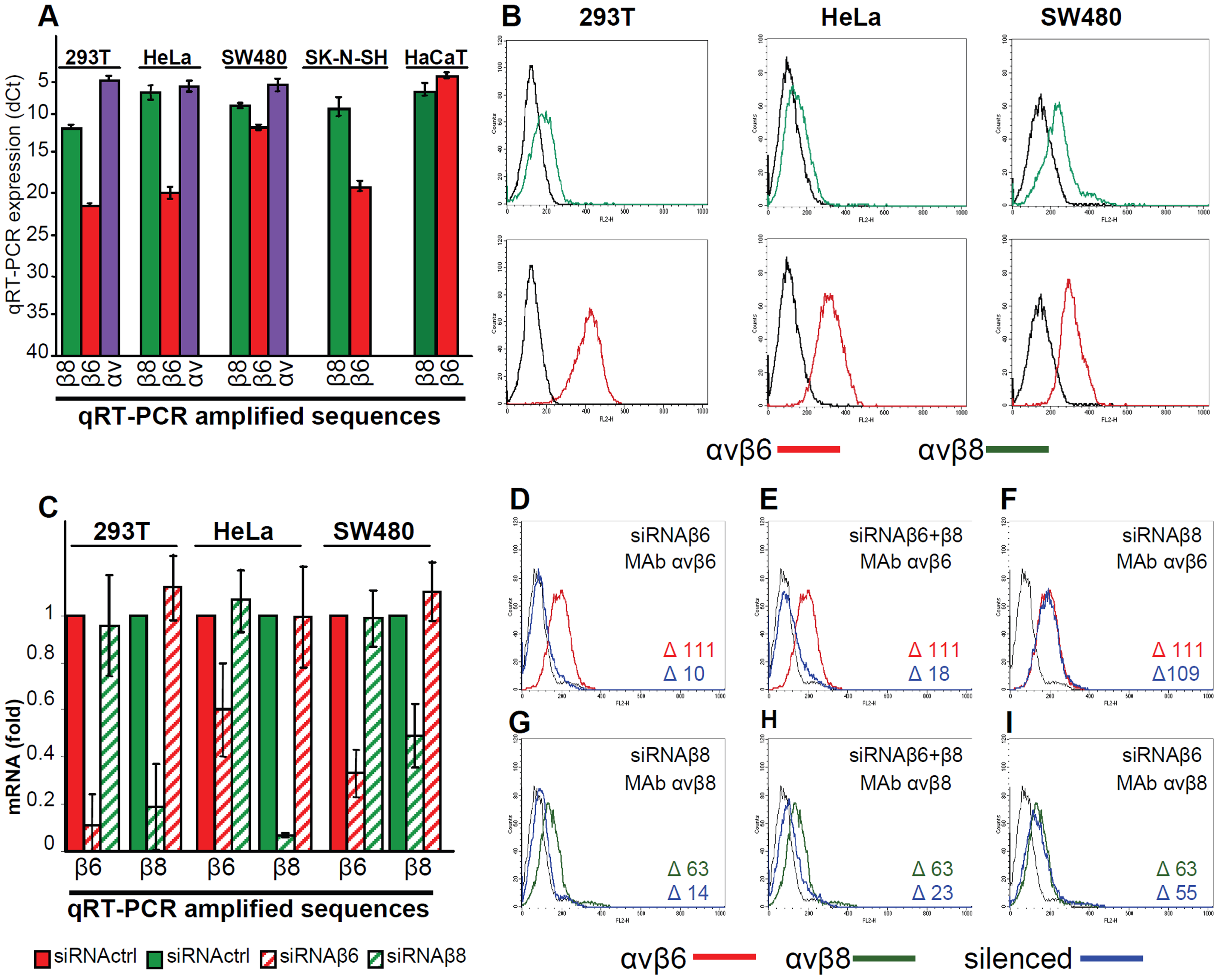 Expression of αvβ6- and αvβ8-integrins in epithelial 293T, HeLa, SW480, SK-N-SH and HaCaT cell lines and silencing by siRNA.