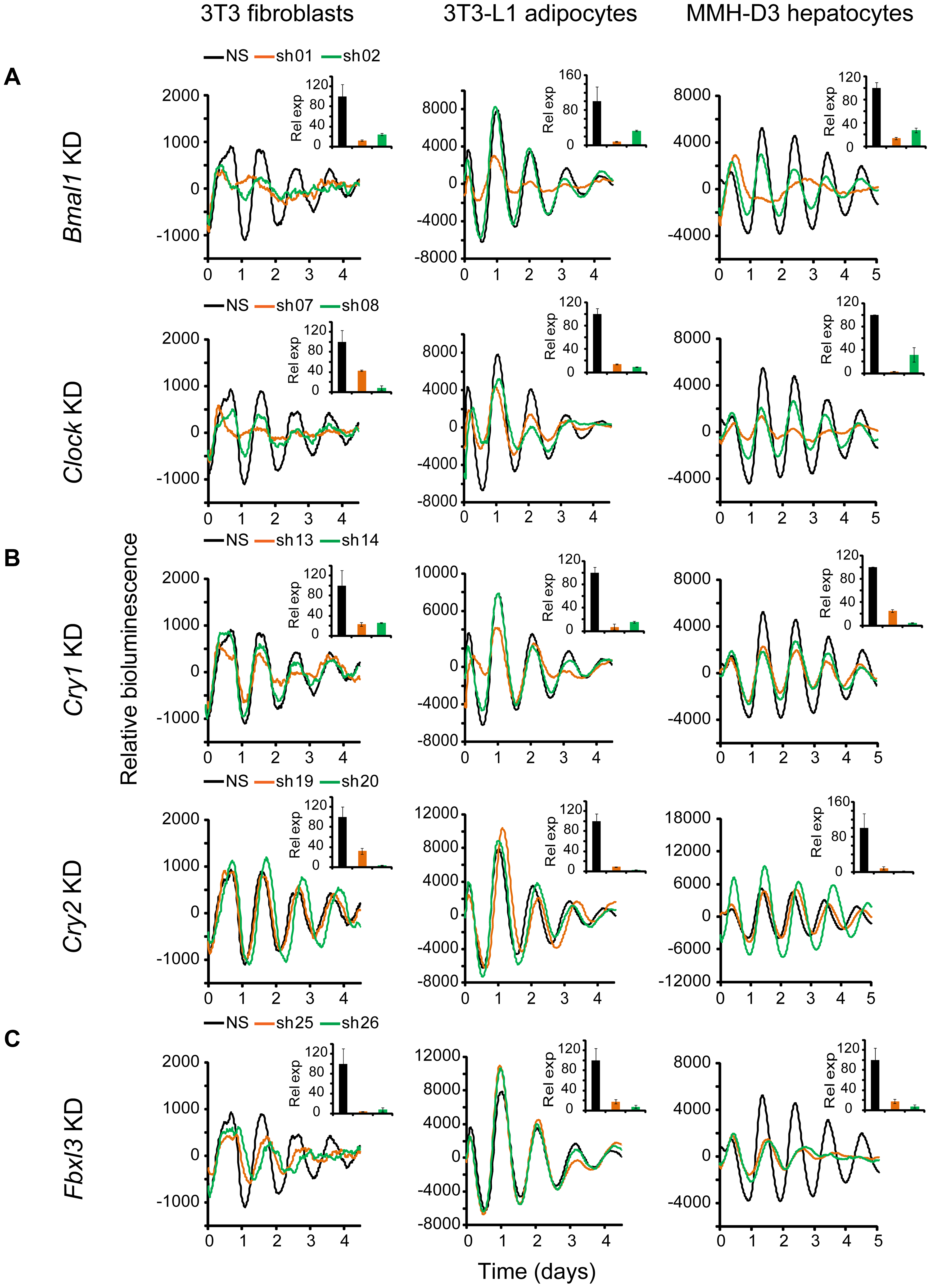 Knockdowns of <i>Bmal1</i>, <i>Clock</i>, <i>Cry1</i>, <i>Cry2</i>, and <i>Fbxl3</i> lead to cell type-ubiquitous circadian phenotypes.