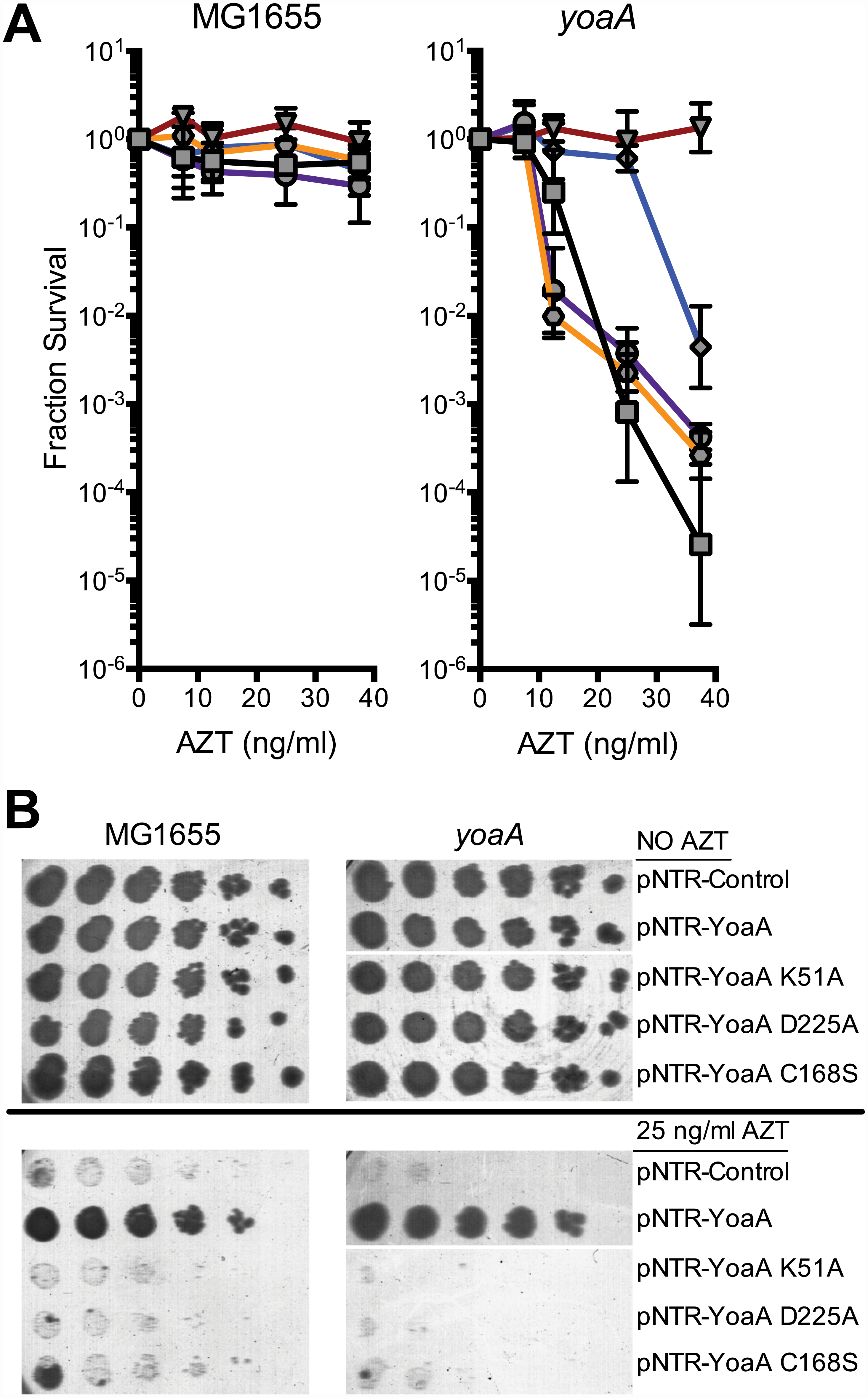 Survival to AZT of wild type and <i>yoaA</i> mutants expressing mutant YoaA on mobile plasmids.