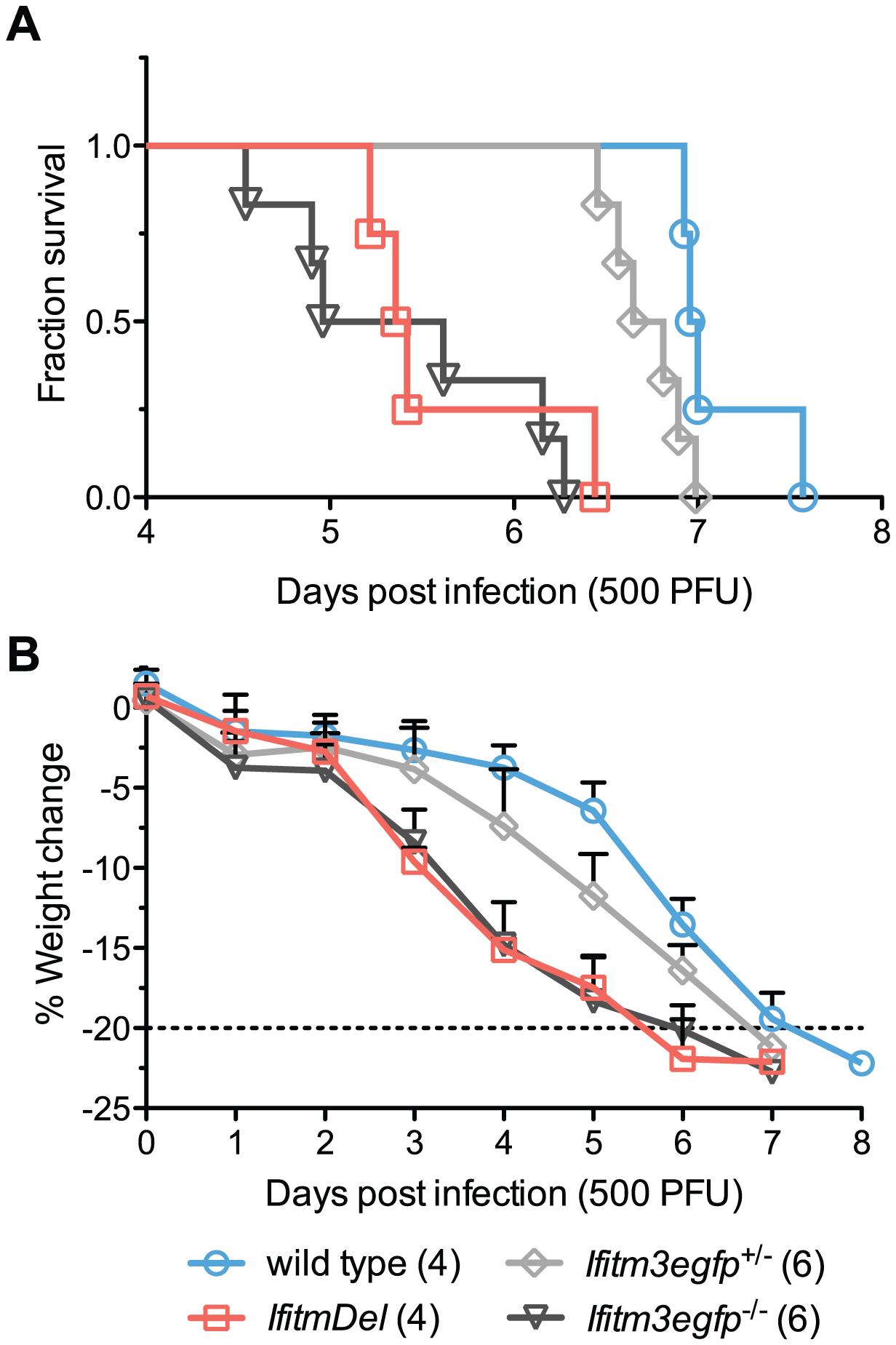 <i>IfitmDel</i> and <i>Ifitm3</i>-specific knockout mice exhibit indistinguishable phenotypes.