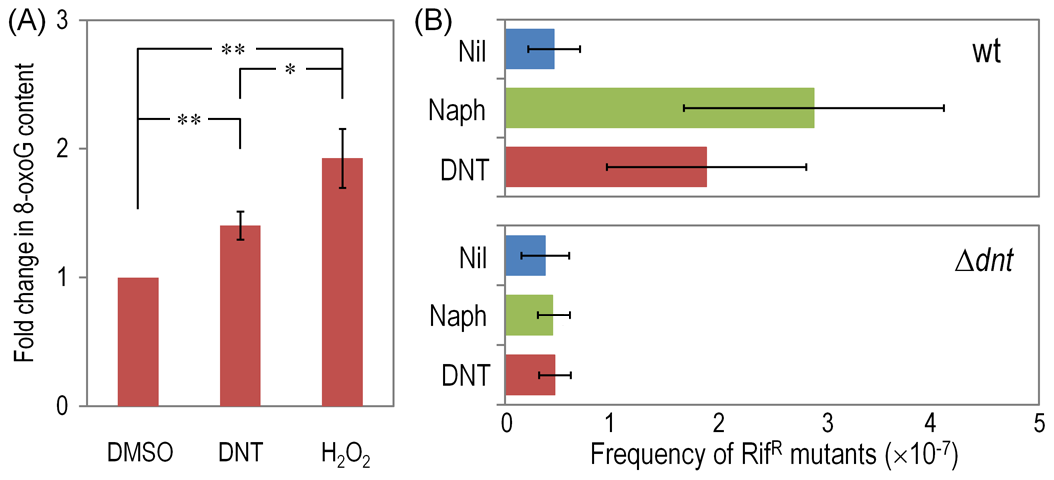 DNA damage and Rif<sup>R</sup> mutants frequency in <i>Burkholderia</i> sp. DNT facing DNT.