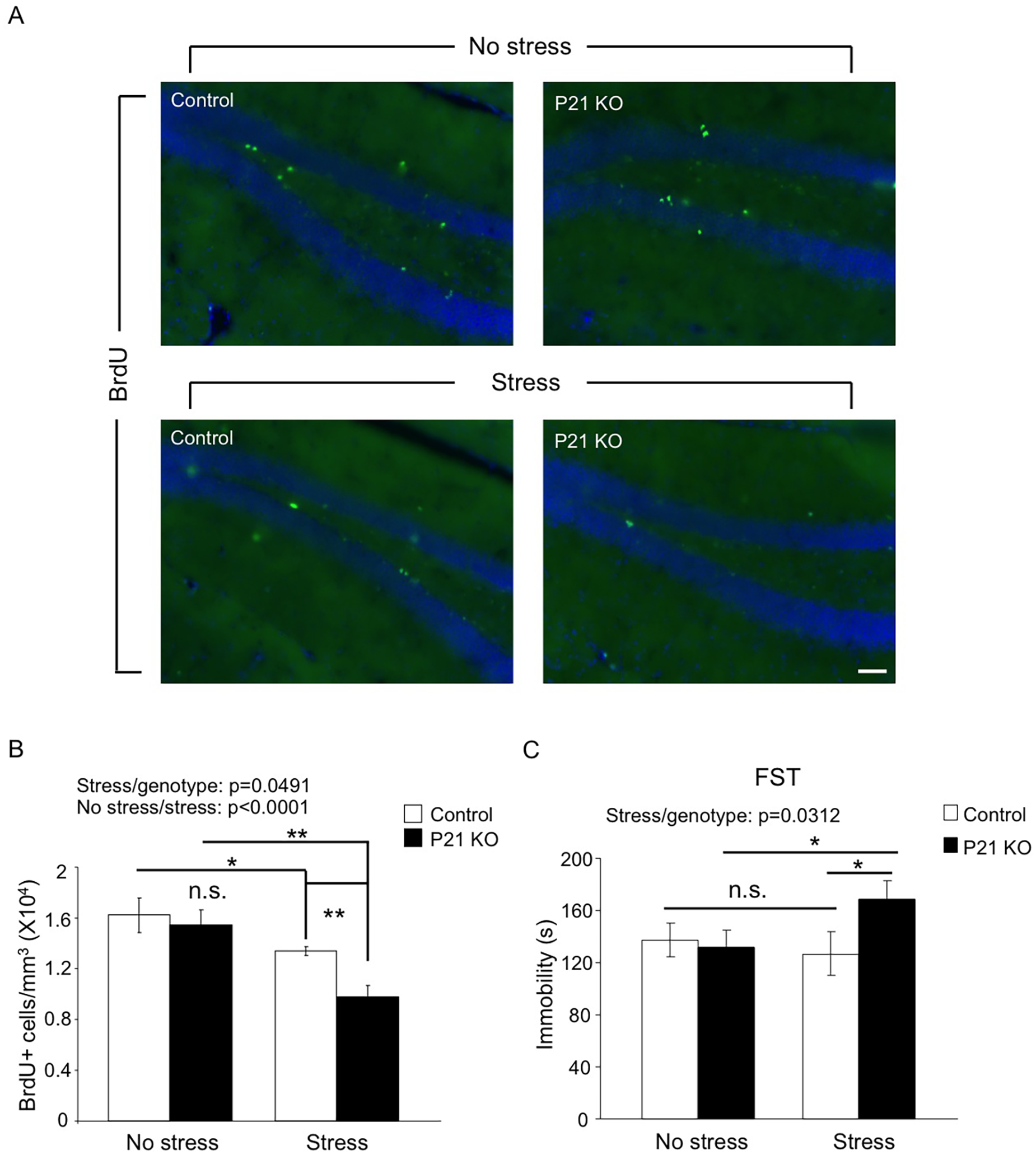 Adult Hap1 expression reduces the stress-induced defective neurogenesis in the hippocampus and depressive-like behavior.