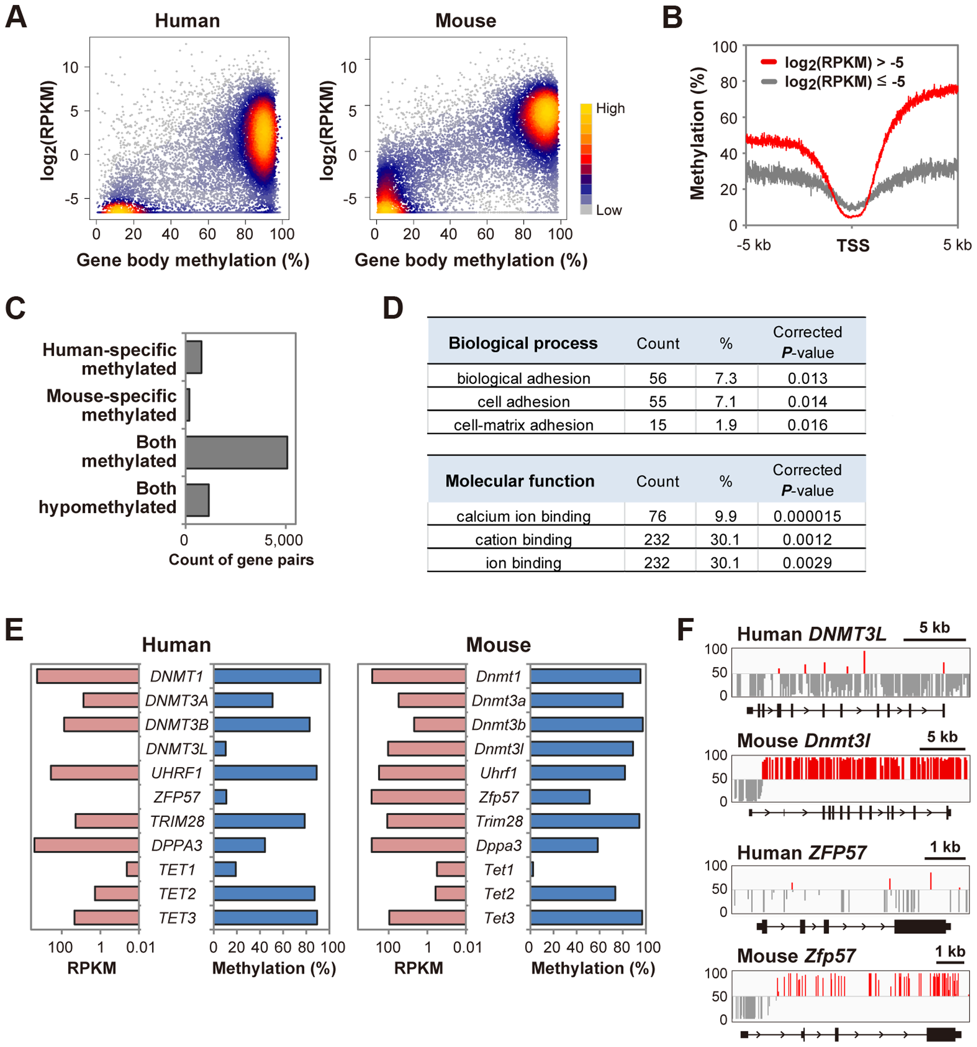 A bimodal gene body methylation pattern associated with transcription in human oocytes.