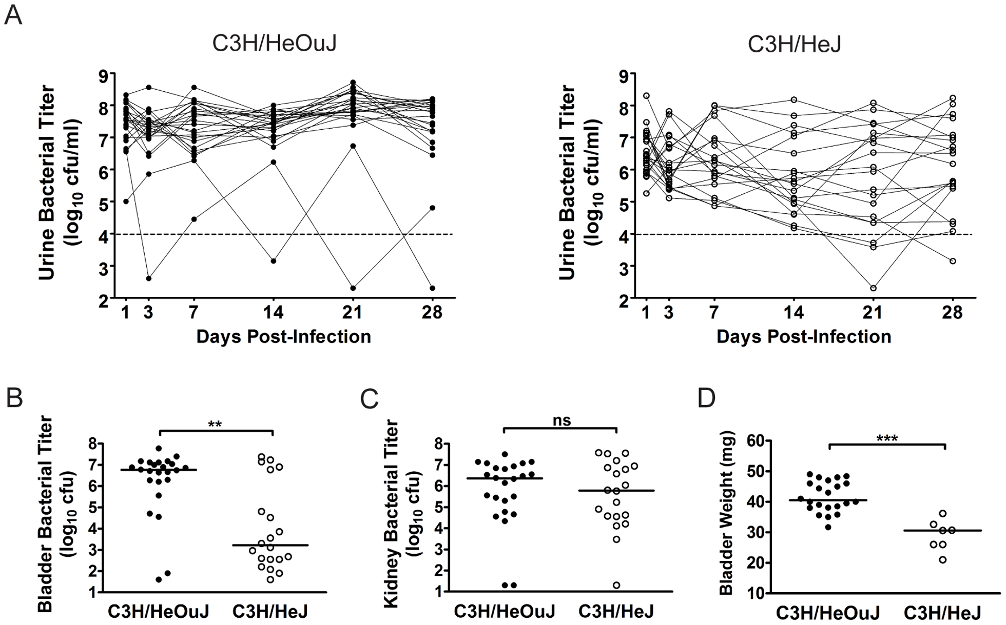 The outcome of UPEC infection of the urinary bladder differs between C3H/HeOuJ and C3H/HeJ mice.