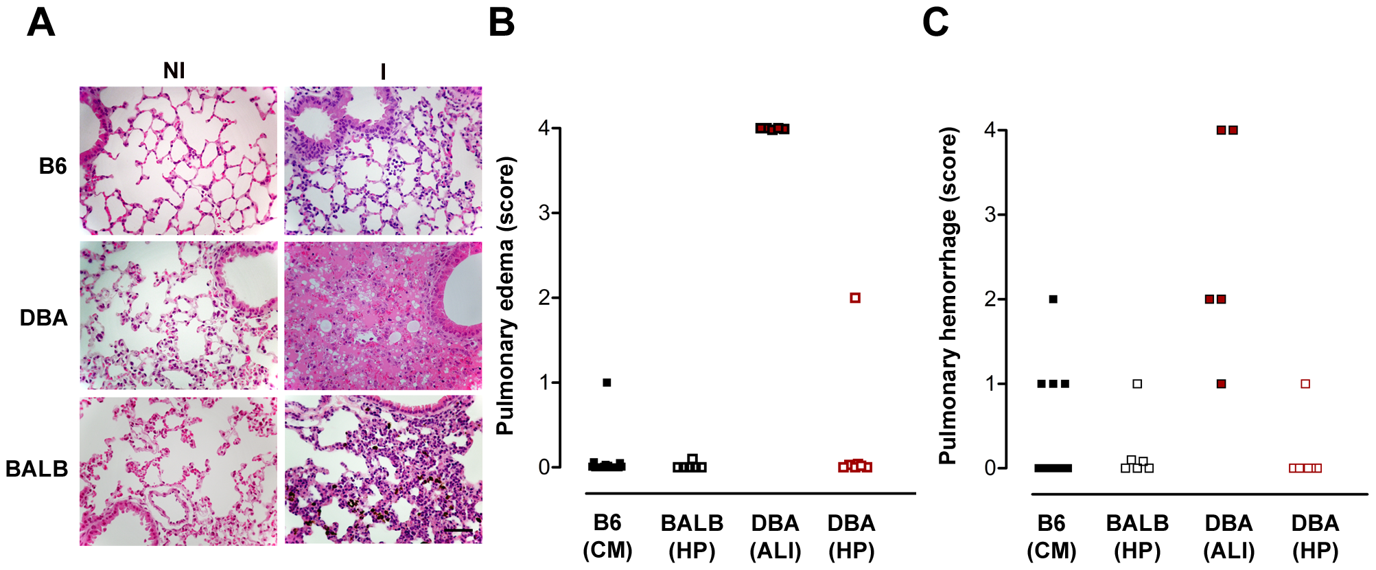 Infection of DBA/2 with <i>P. berghei</i> ANKA constitutes a rodent model for malaria-associated acute lung injury (ALI).