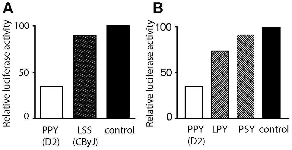 Structural polymorphisms at amino acid residues 578 and 1027 influence KIF1c function.