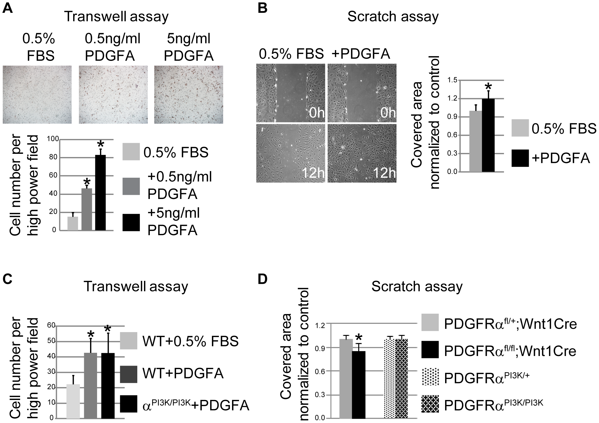 PDGFRα controls chemotaxis and cell motility.