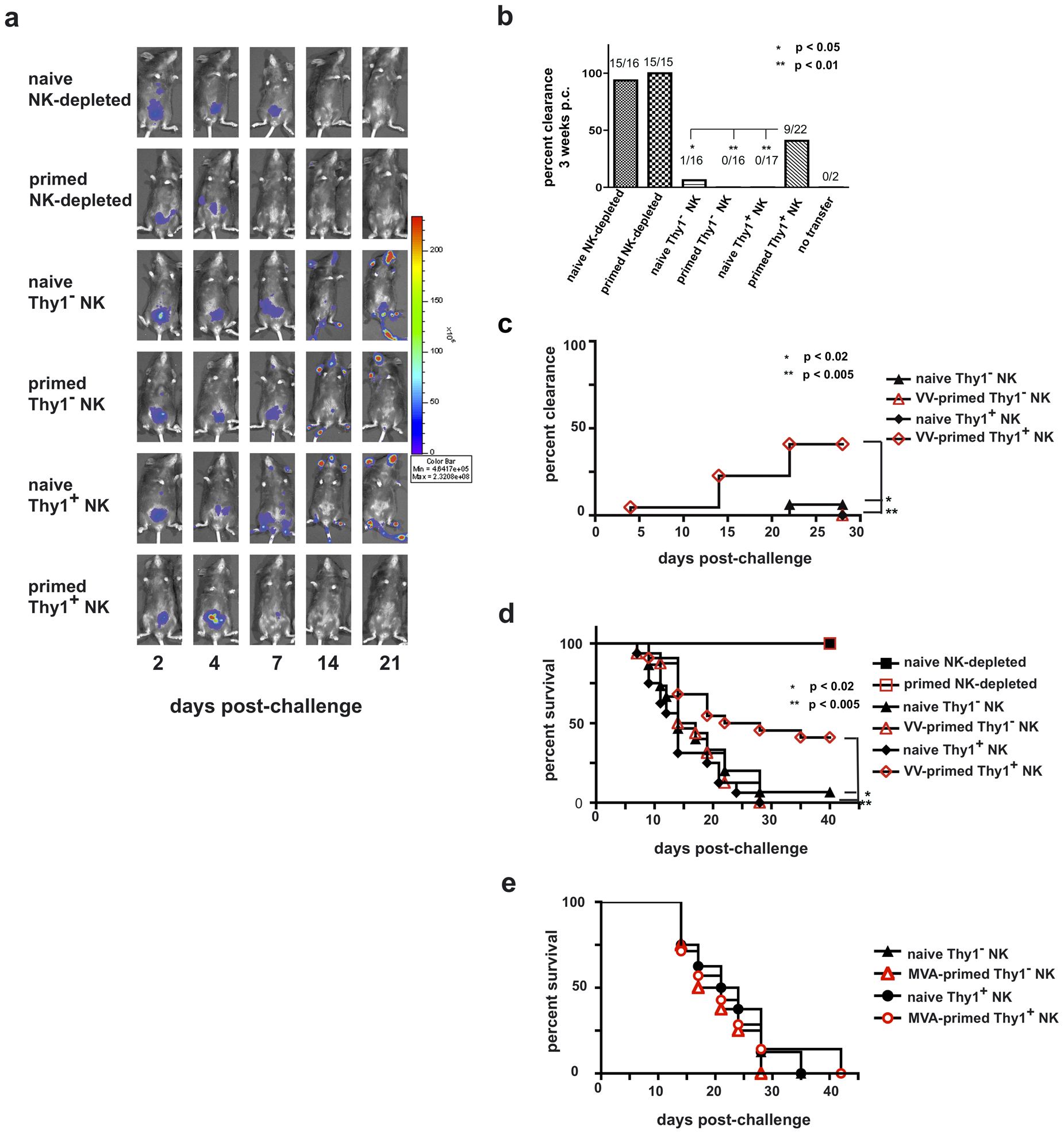 Innate immune protection against a vaccinia virus challenge is conferred on naïve RAG1<sup>ko</sup> mice by the adoptive transfer of primed Thy1<sup>+</sup> liver-resident NK cells.