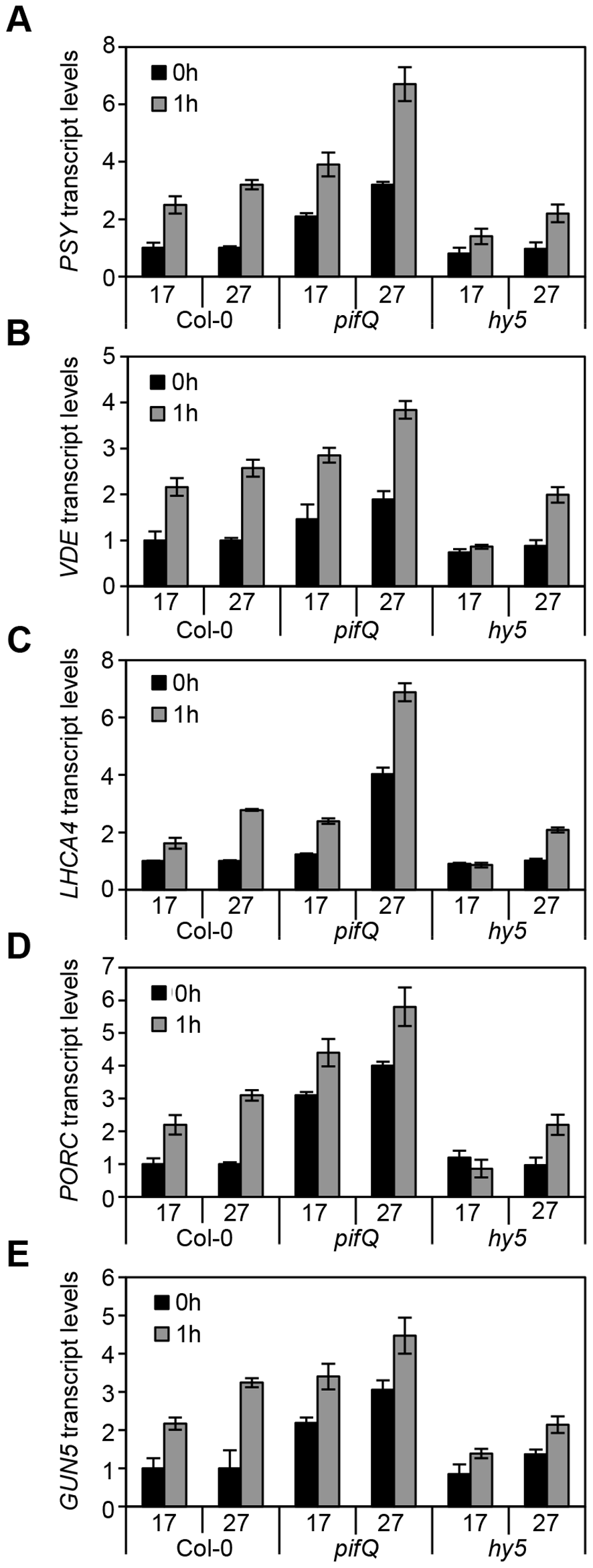 Expression levels of genes related to photosynthetic pigment accumulation at 17°C and 27°C in Col-0, <i>pifQ</i> (<i>pif1-1 pif3-3 pif4-2 pif5-3</i>) and <i>hy5-215</i>.