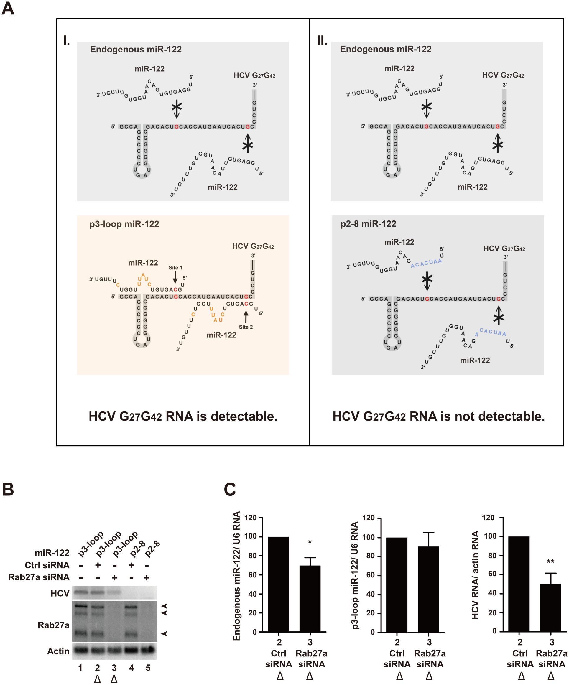 Effects of Rab27a depletion on HCV RNA abundance are independent of the 5' terminal miR-122:HCV complex.