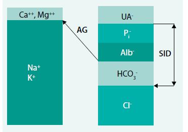 Schéma. Princip elektroneutrality