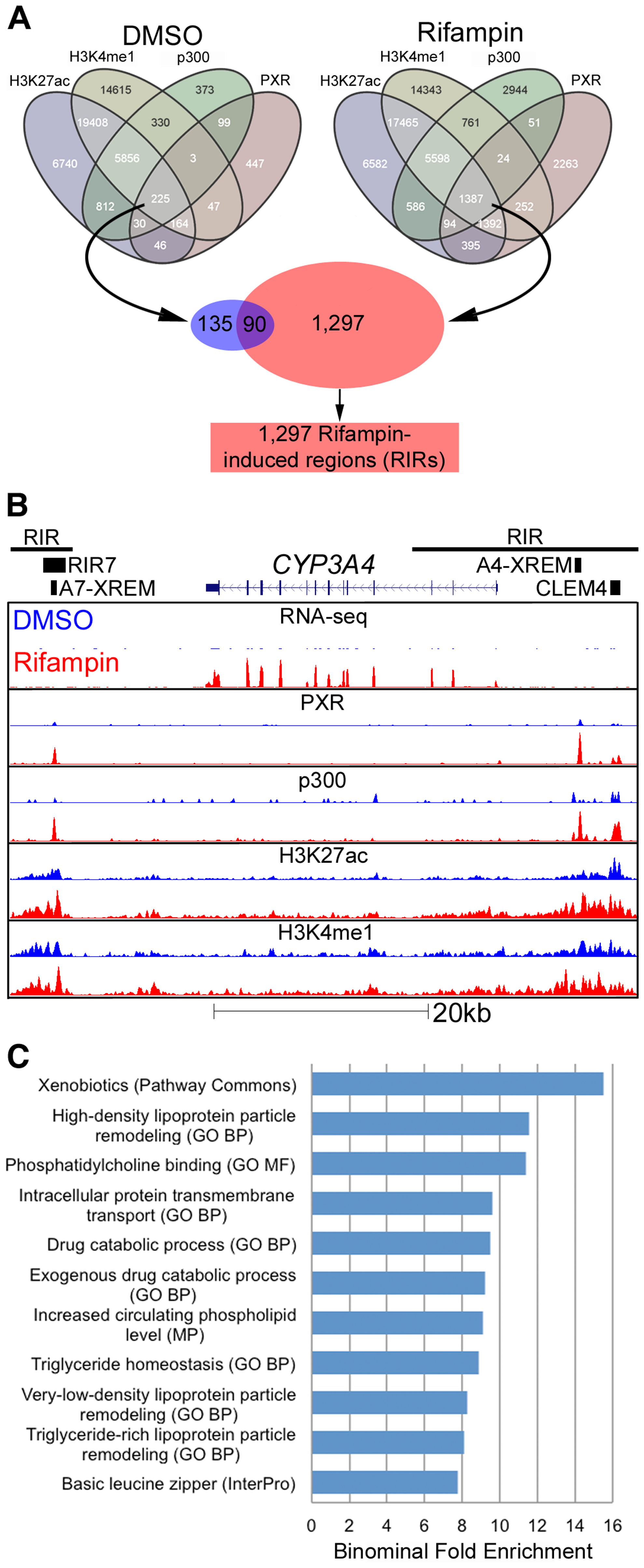 Genomic characterization of RIRs.