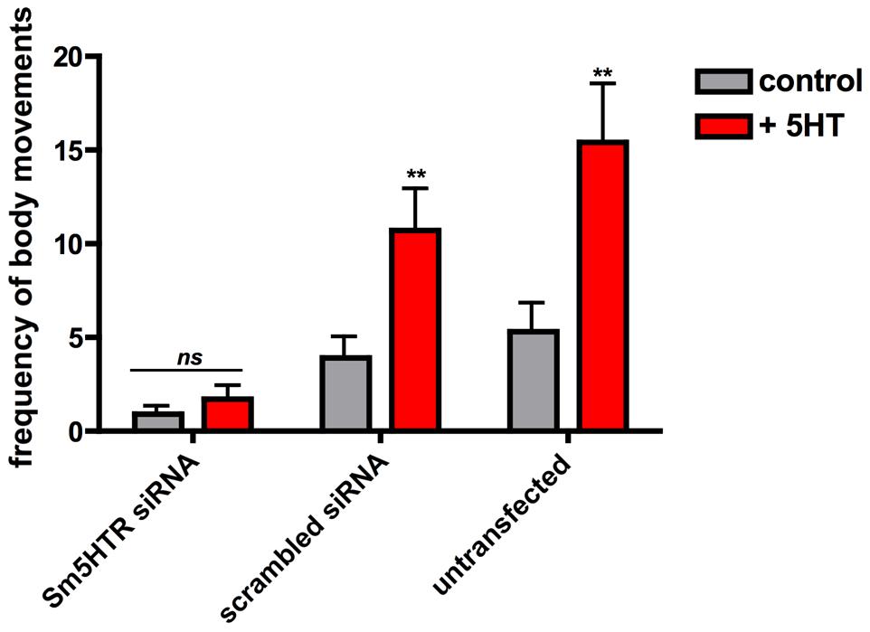 RNAi-suppressed larvae are resistant to added serotonin.