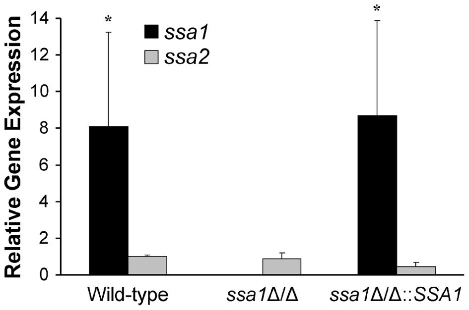 Relative transcript levels of <i>SSA1</i> and <i>SSA2</i>.