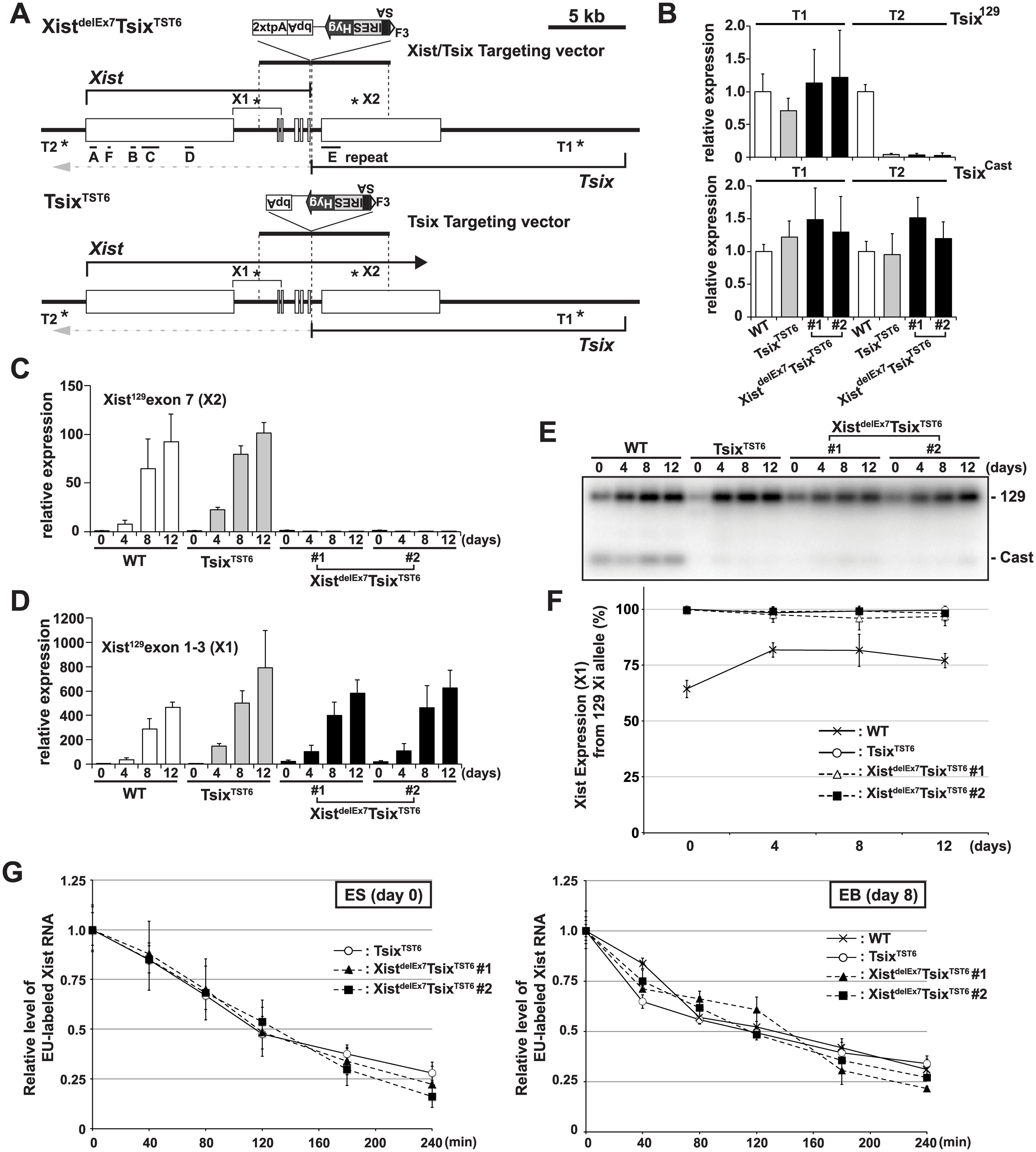 The creation of the <i>Xist</i>/<i>Tsix</i> double truncation Xist<sup>delE7</sup>Tsix<sup>TST6</sup> and <i>Tsix</i> truncation Tsix<sup>TST6</sup> mutant female ES cells.