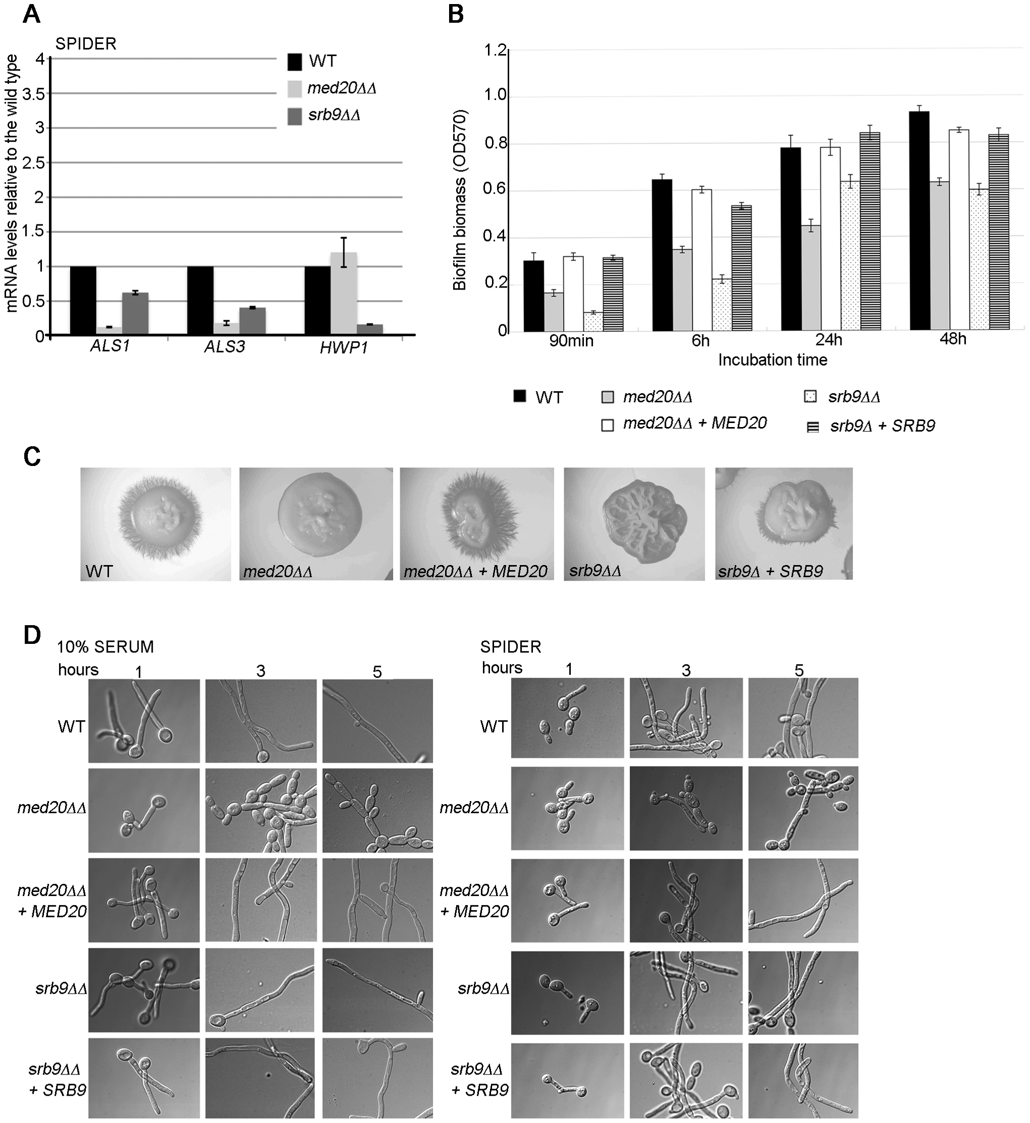 The Mediator Head domain subunit <i>MED20</i> and <i>SRB9/MED13</i> from the Kinase domain contribute to filamentous growth and biofilm formation by <i>C. albicans</i>.
