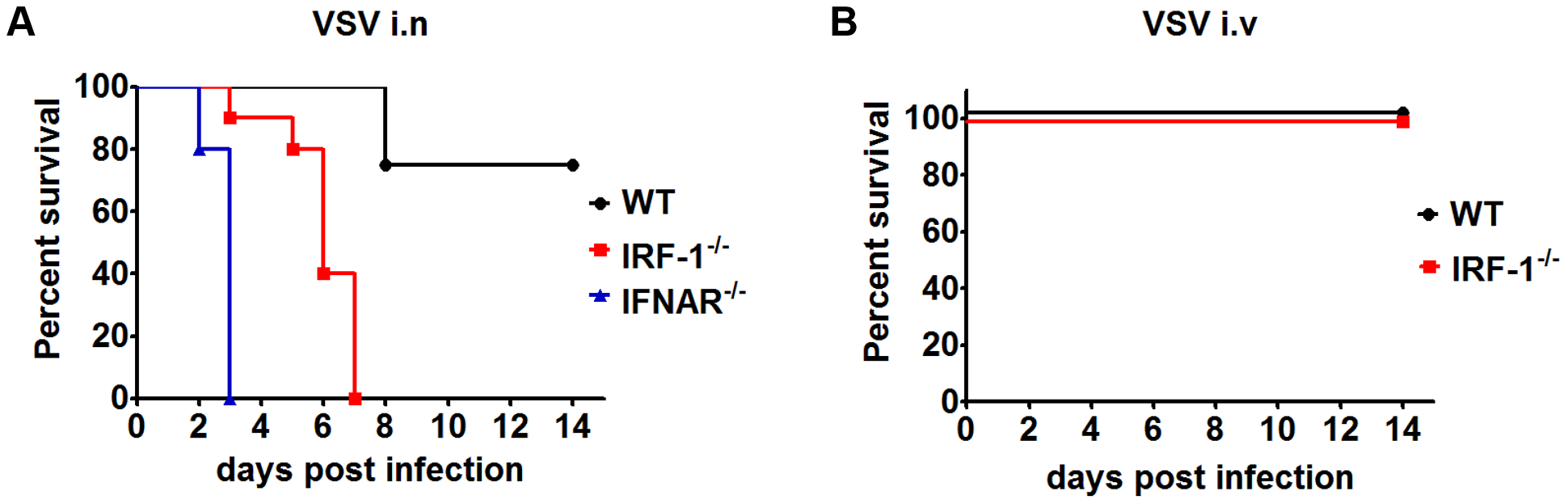 IRF-1 protects mice from lethal intranasal VSV infection.