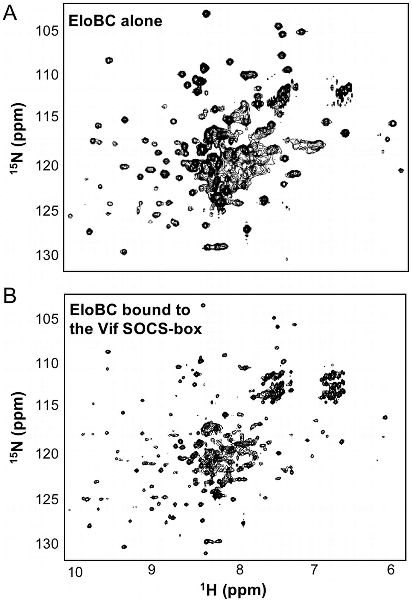 NMR spectroscopy of EloBC.