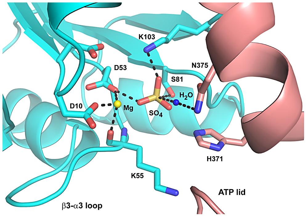 Proposed Mechanism for CrdA∼P Dephosphorylation by CrdS.