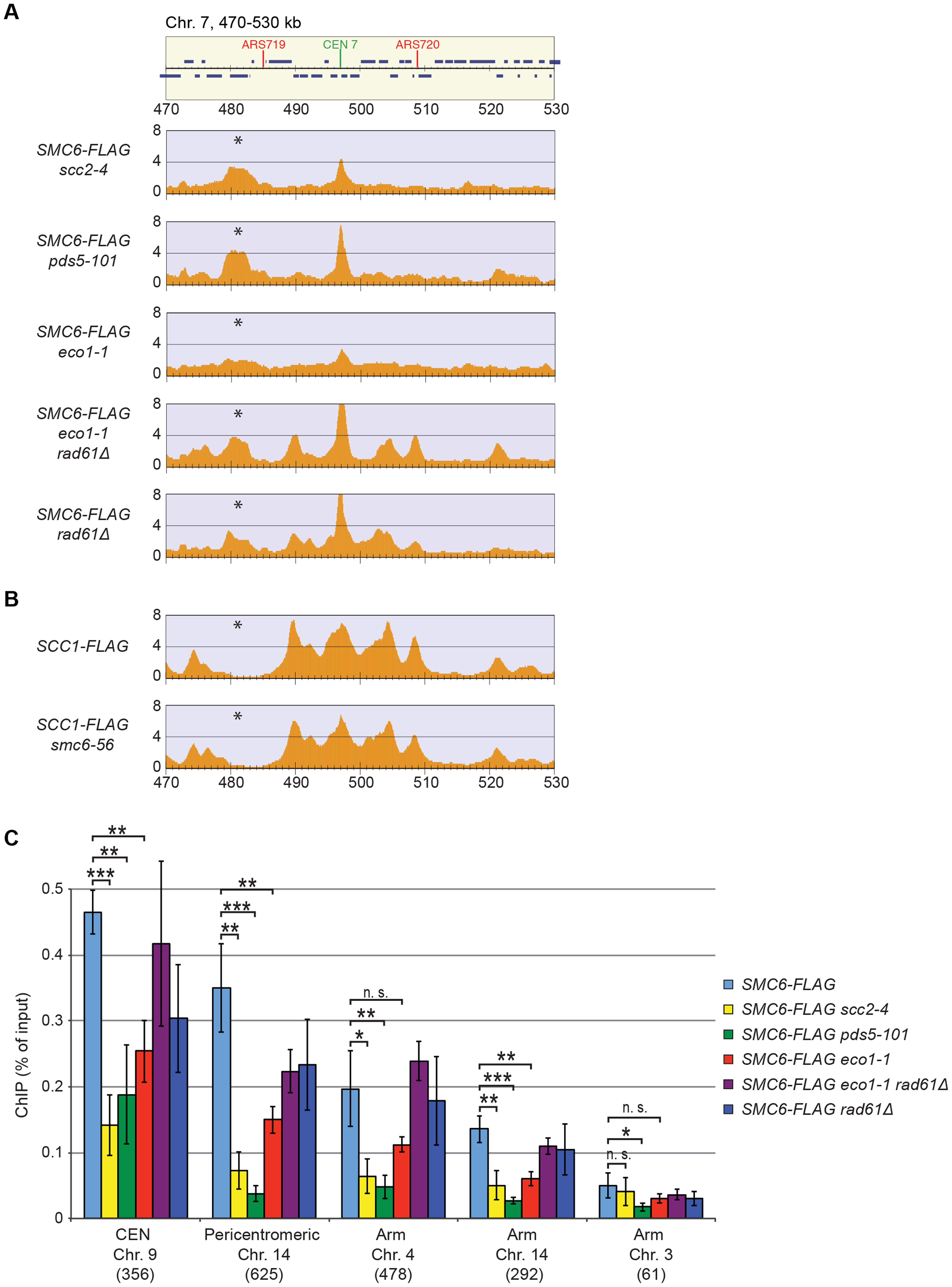 The chromosomal association of Smc5/6 depends on sister chromatid cohesion.