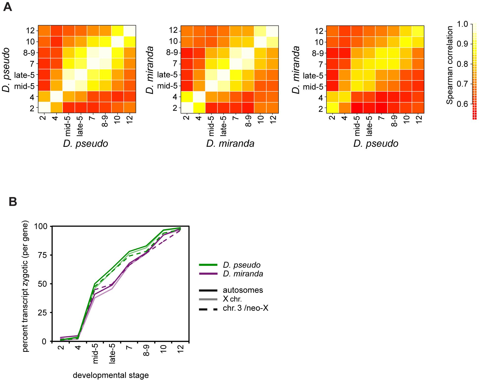 Timing of transcript abundances in <i>D. pseudoobscura</i> and <i>D. miranda</i>.