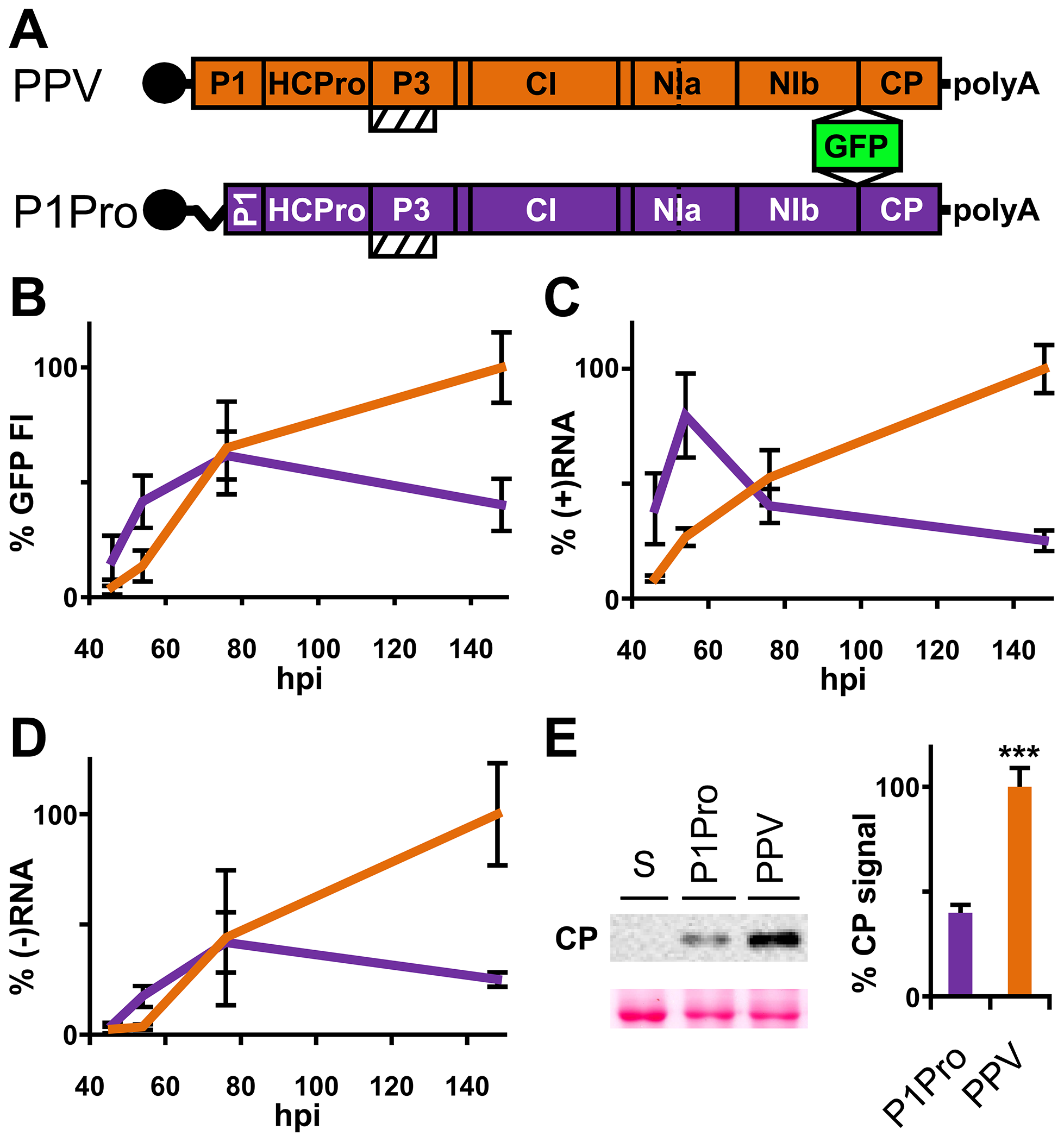 Early amplification dynamics for wild-type PPV and P1Pro viral clones.