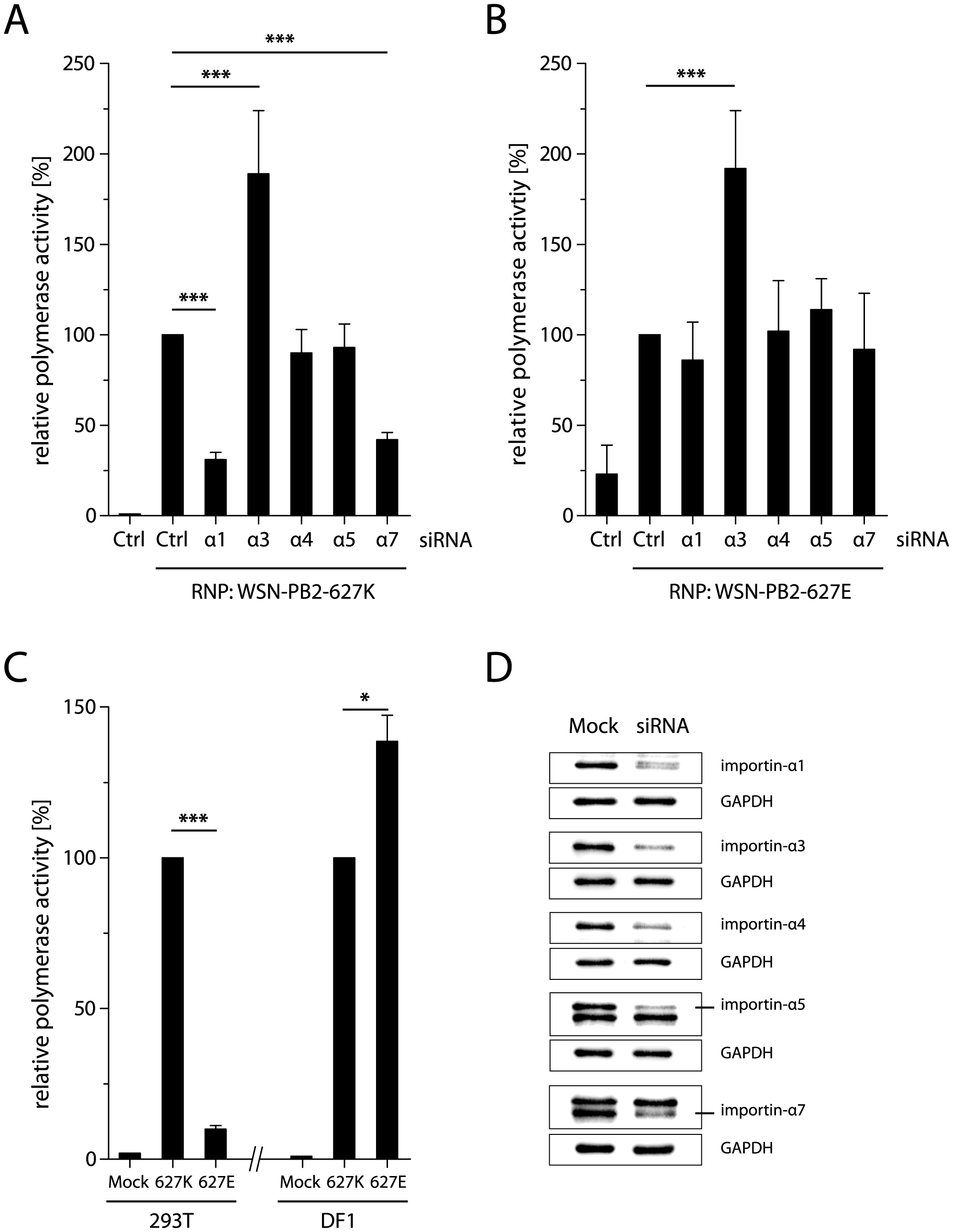 Importin-α1 and -α7 are required for human-like polymerase activity in human cells.