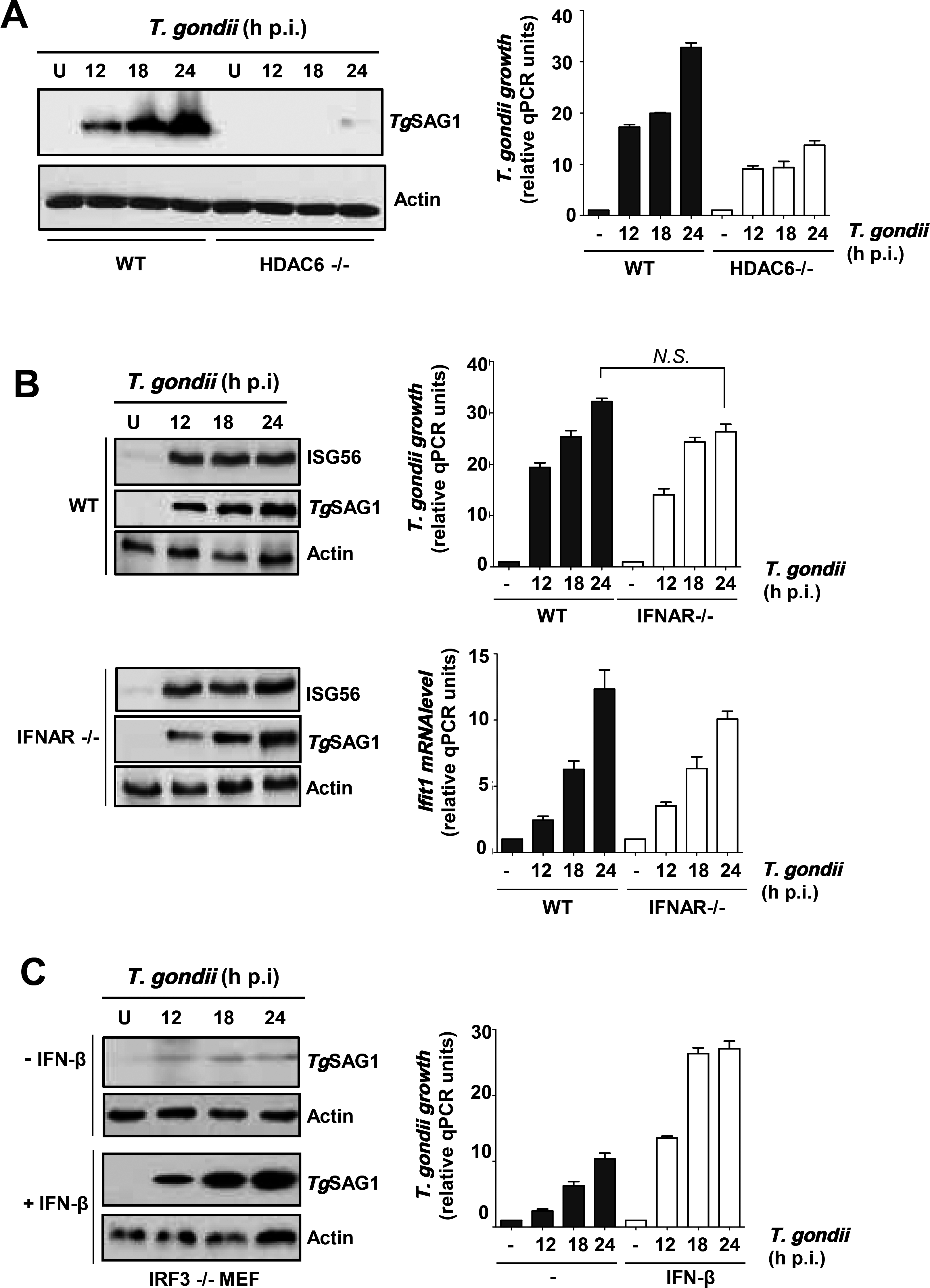 Requirement of IRF3-induced host genes for <i>T</i>. <i>gondii</i> replication.