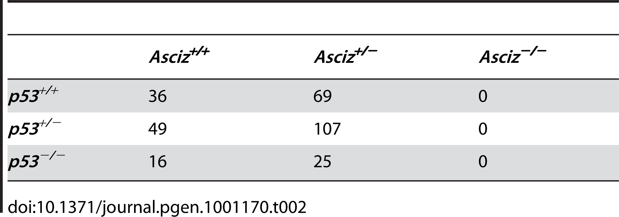 Genotypes of offspring from <i>Asciz<sup>+/−</sup> p53<sup>+/−</sup></i> intercrosses at weaning.