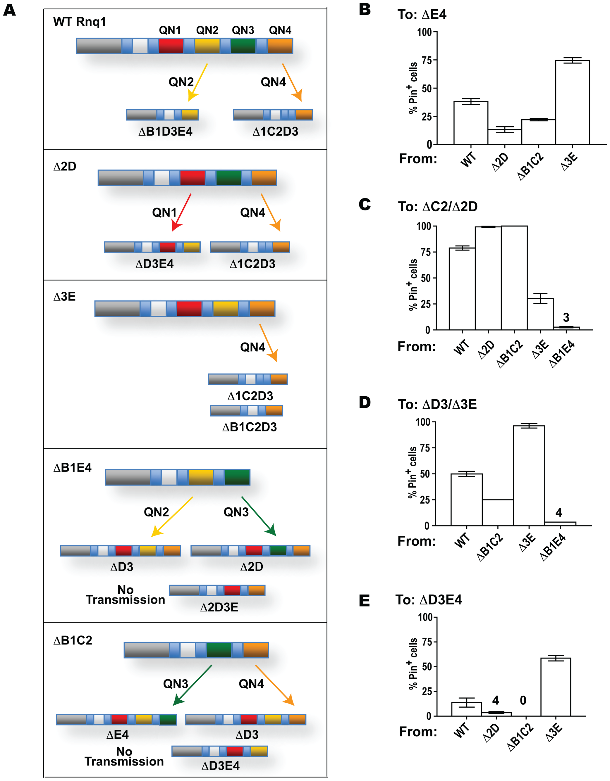 Transmission of the prion state between Rnq1 fragments.