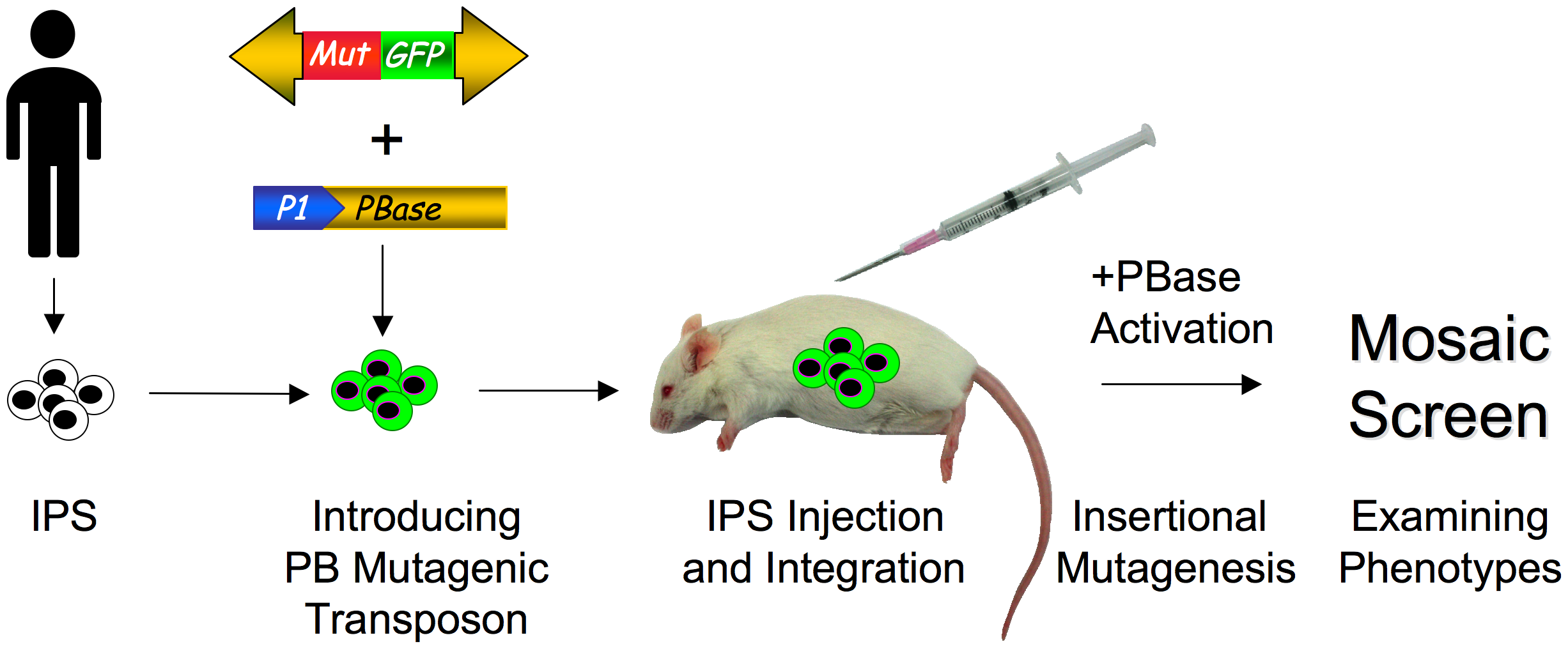 Screening for phenotypes in humanized mice with patient-derived IPS cells.