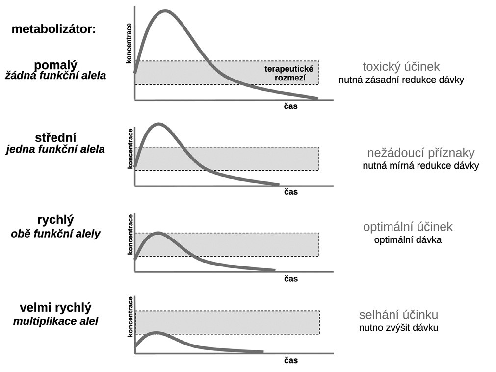 Vztah typu metabolizátora a účinku léčiva