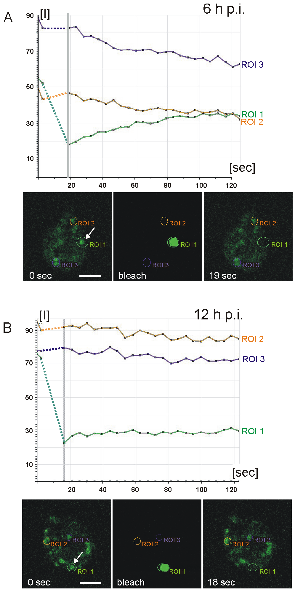 Fluorescence recovery after photobleaching (FRAP) analysis reveals condensation of CWP3::GFP during ESV maturation.
