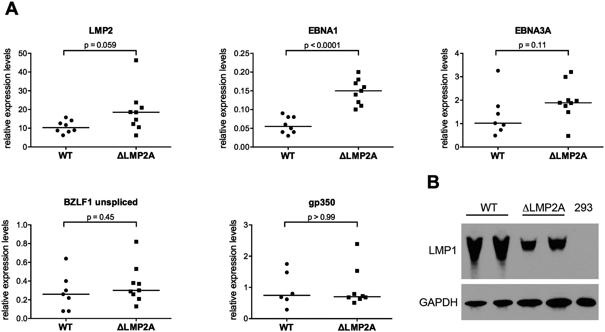 Expression of EBV latent and lytic-cycle genes in LCLs with or without LMP2A.