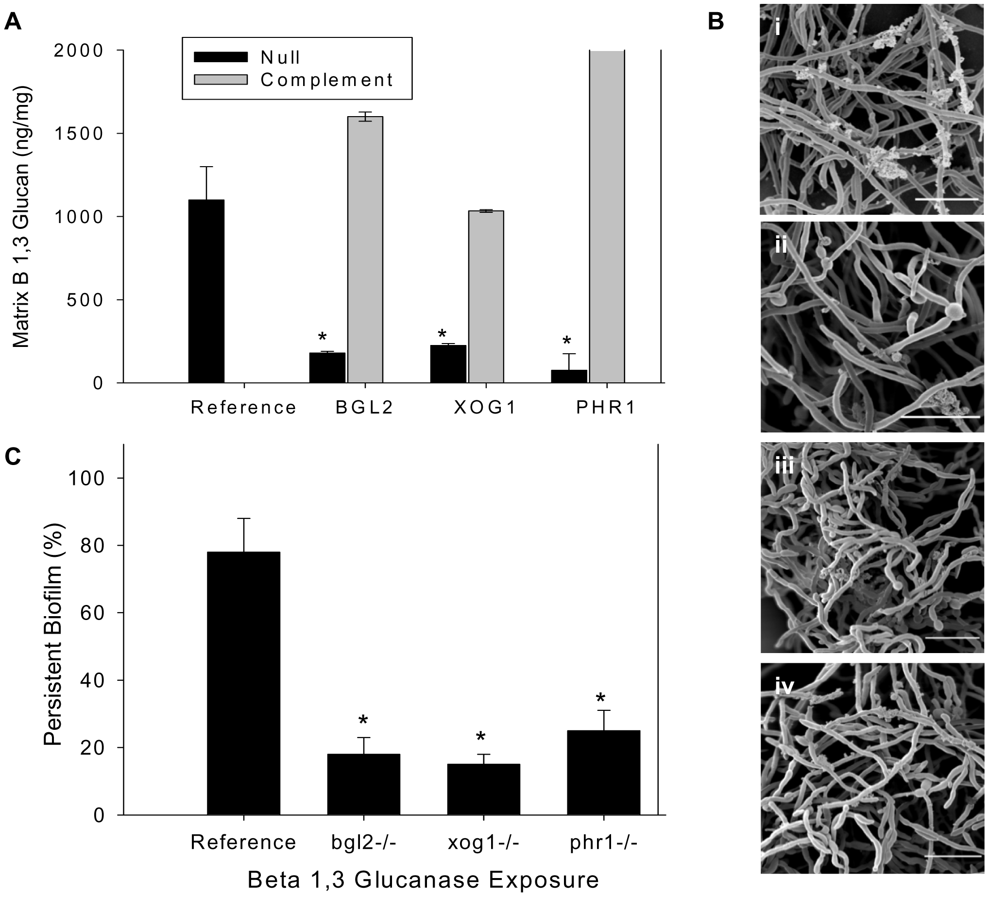 Analysis of biofilm matrix.