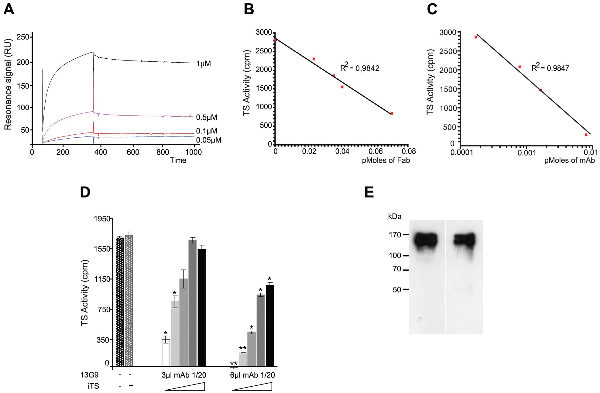Biochemical characterization of the TS-13G9 mAb interaction.