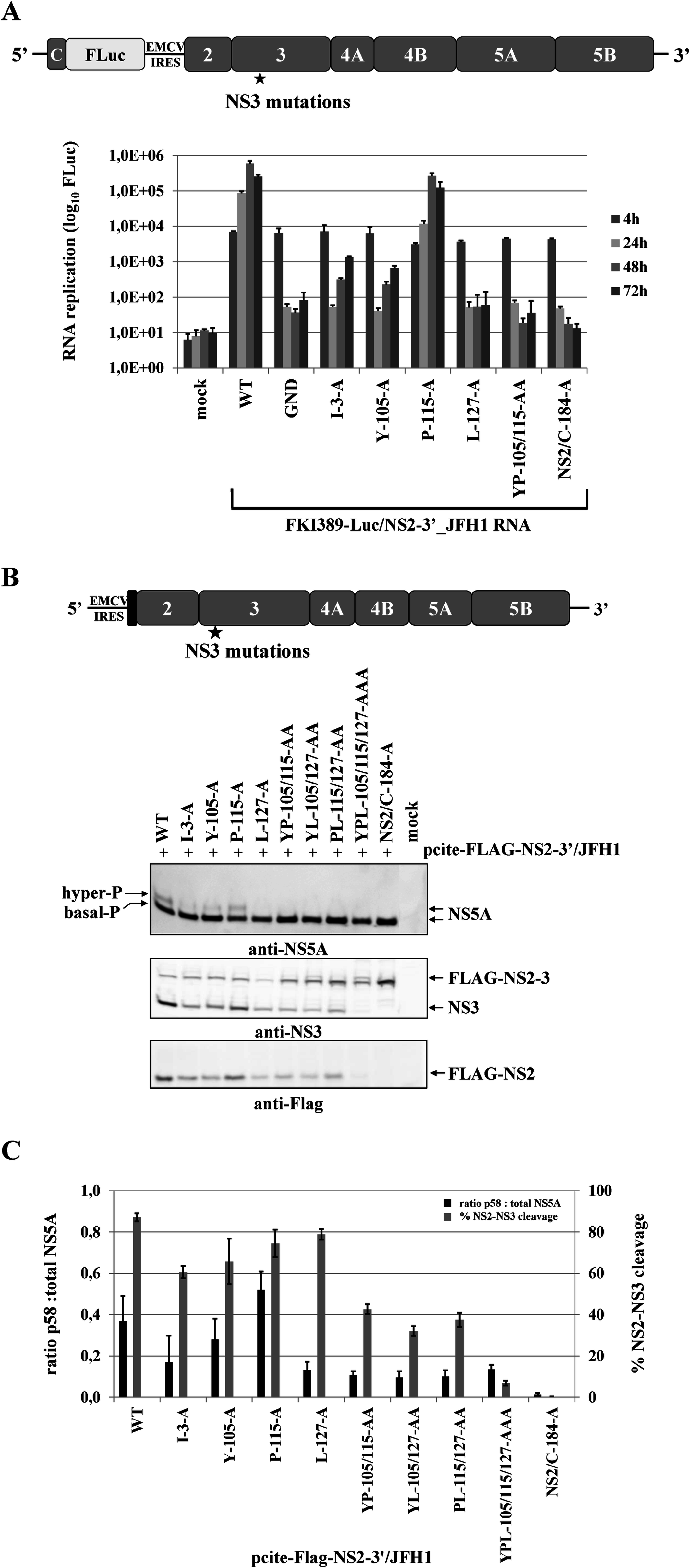 Mutational analysis of the NS3 mutations in the context of a HCV genotype 2a subgenomic NS2-5B replicon revealed NS2-NS3 cleavage is a prerequisite for NS5A hyperphosphorylation.