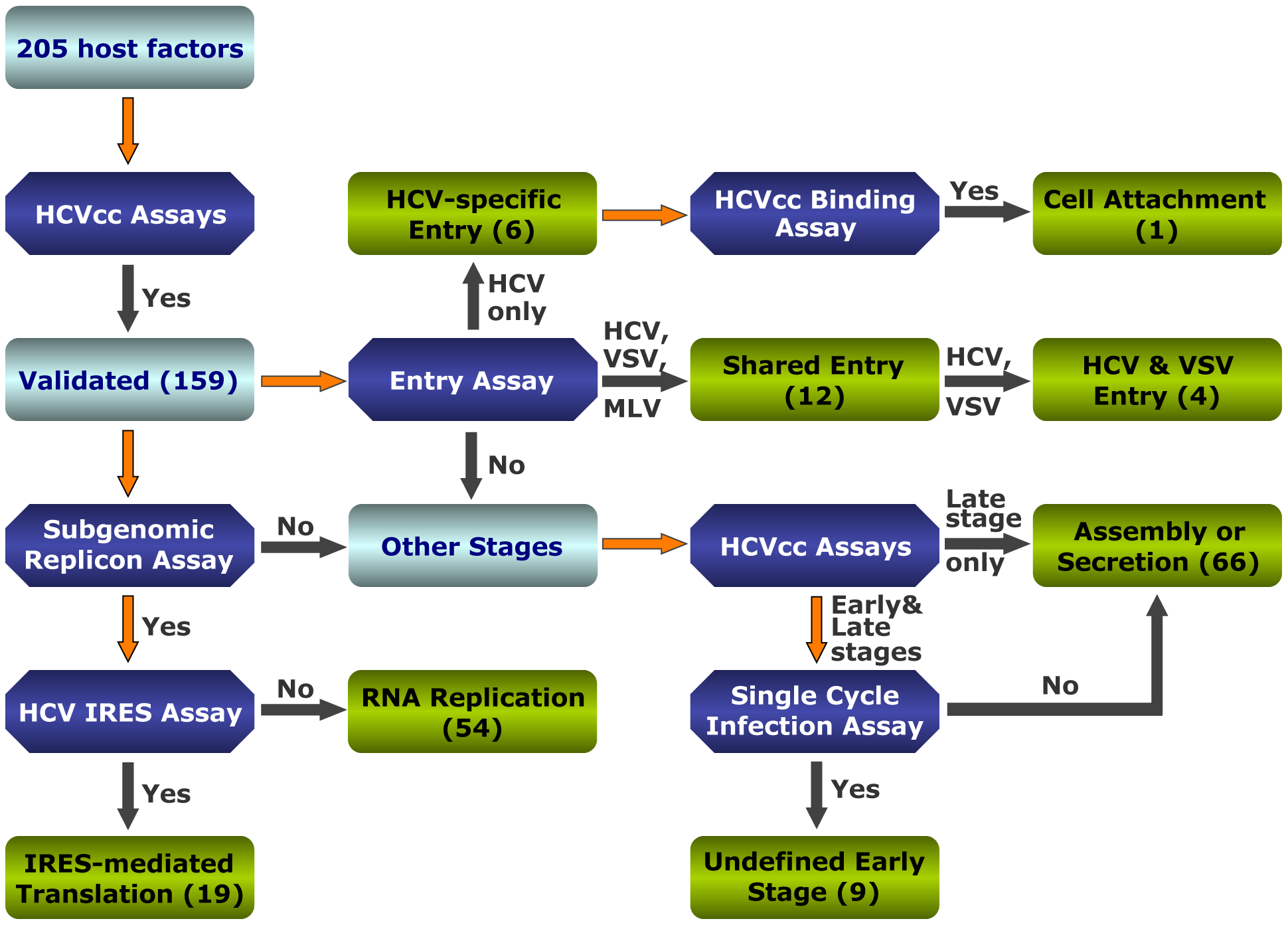 Strategies to interrogate host dependencies involved in the complete HCV replication cycle.