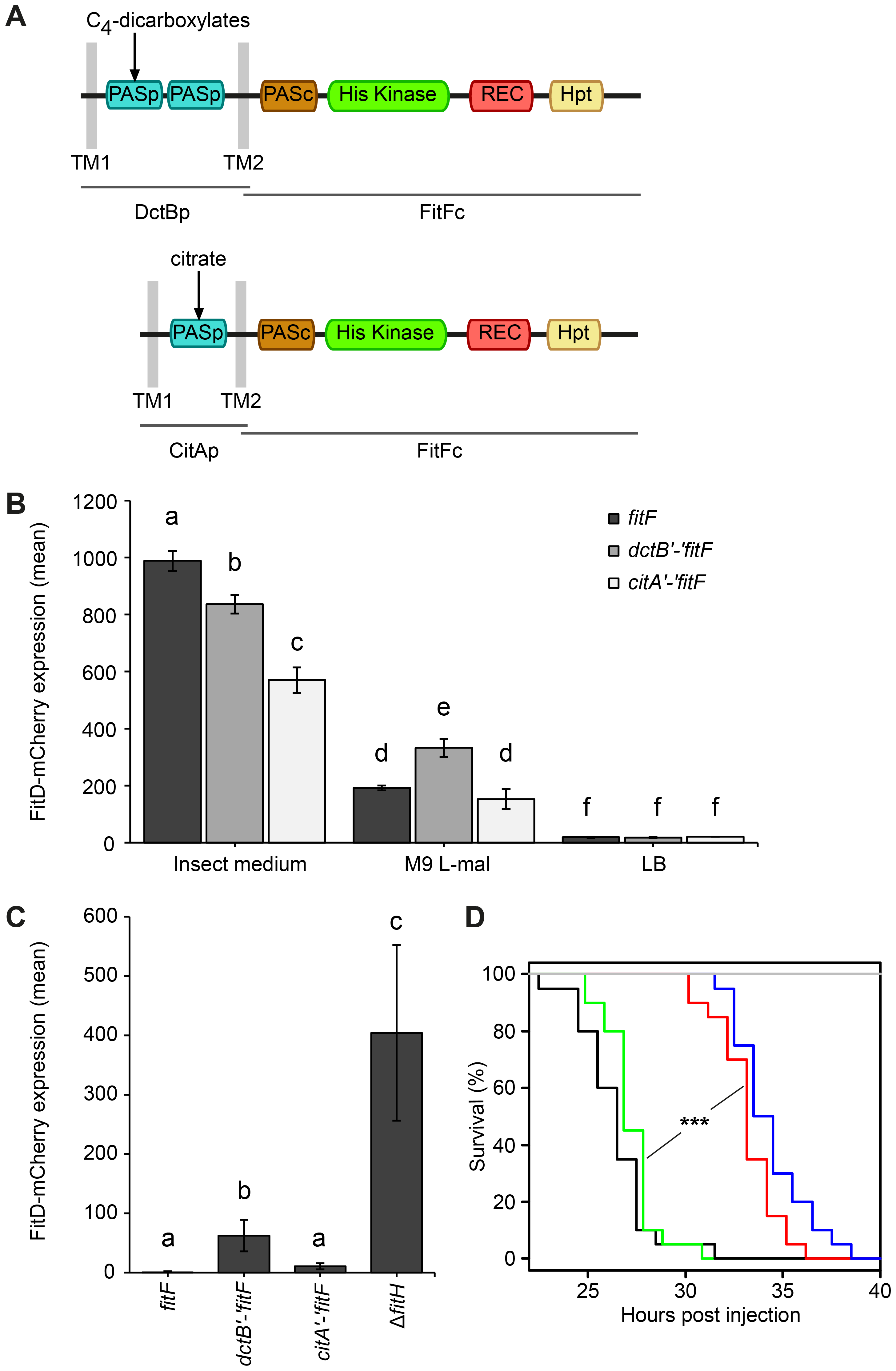 A DctBp-FitFc chimera regulates toxin expression similarly to wild-type FitF.